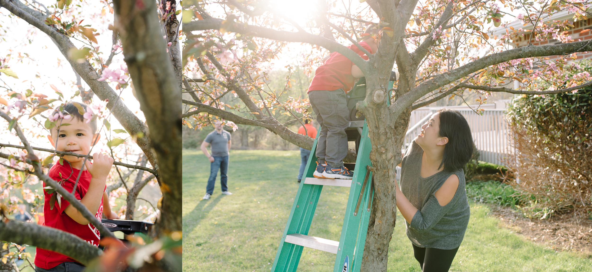 ligonier family photography, mariah fisher.jpg