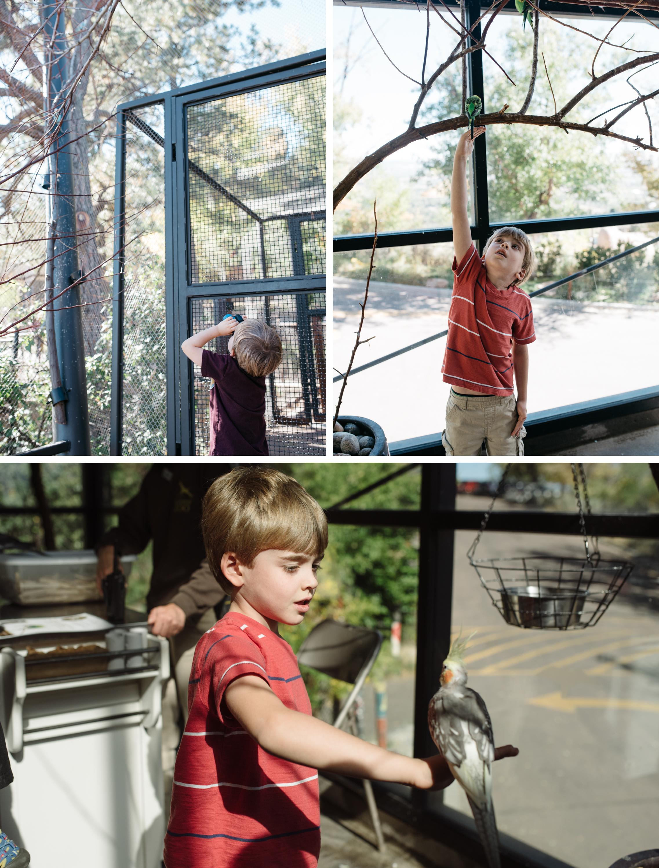 cheyenne mountain zoo.jpg