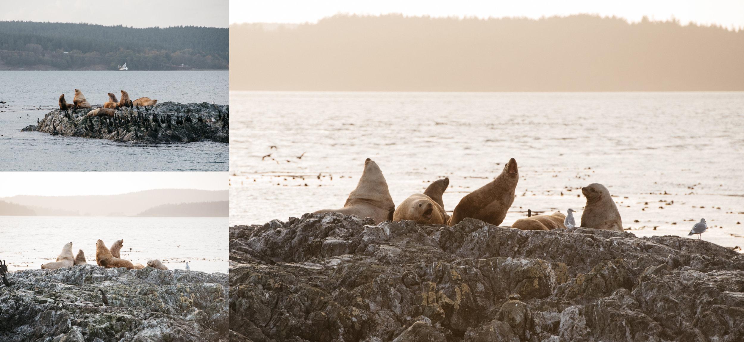 seals anacortes washington mariah fisher travel photography.jpg