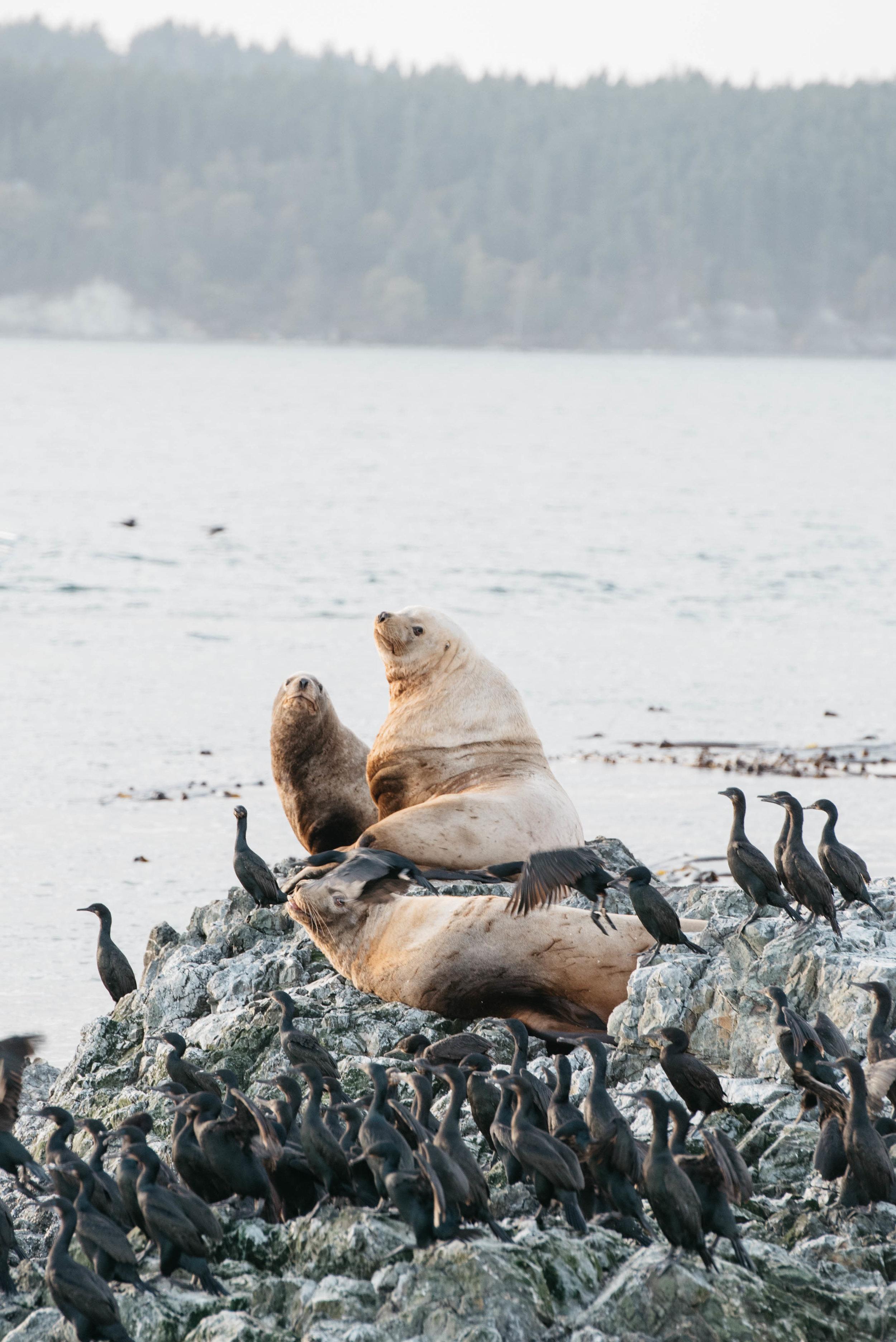 Seattle Travel Photographer, travel photography, mariah fisher-4.jpg