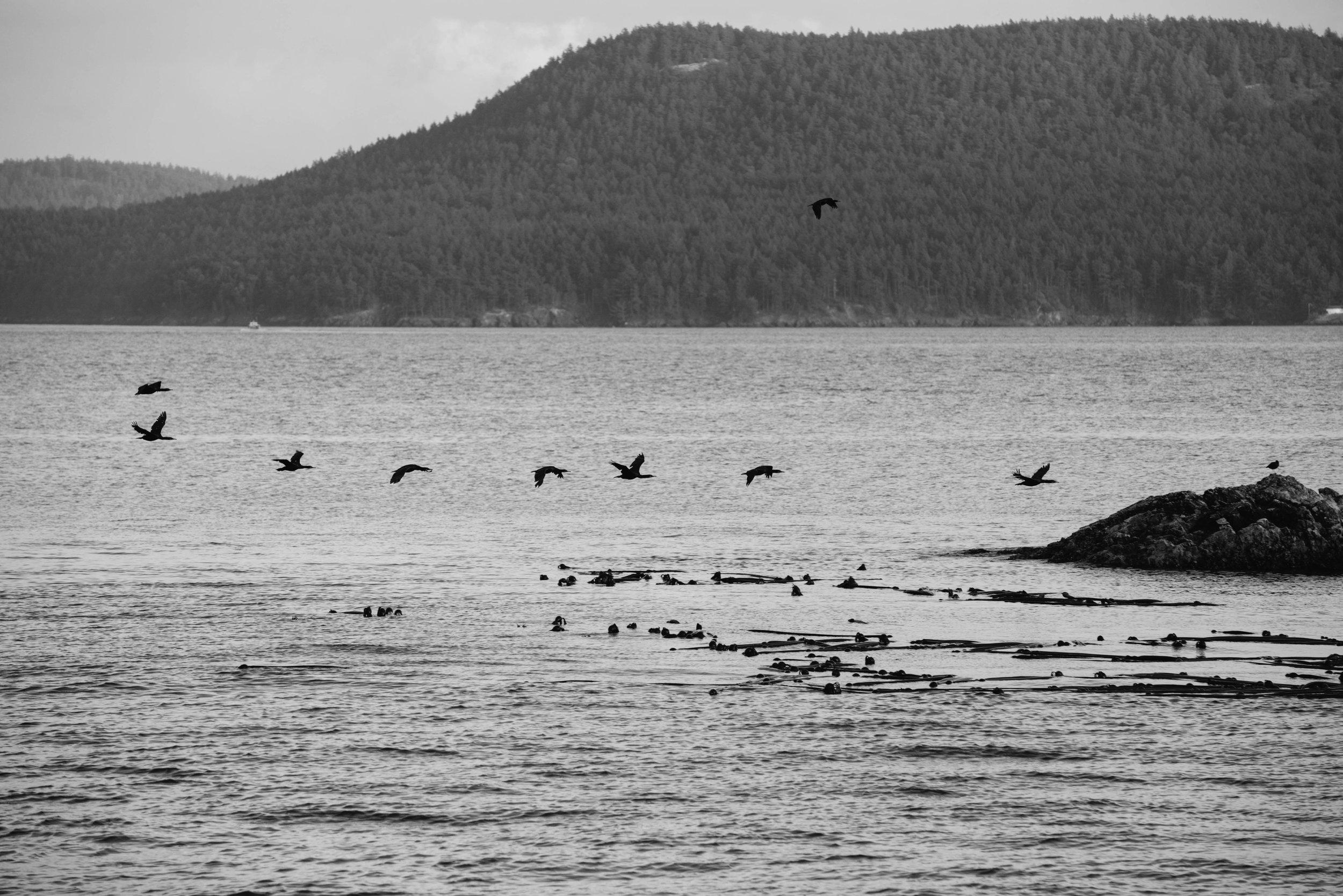 Seattle Travel Photographer, travel photography, mariah fisher-6.jpg