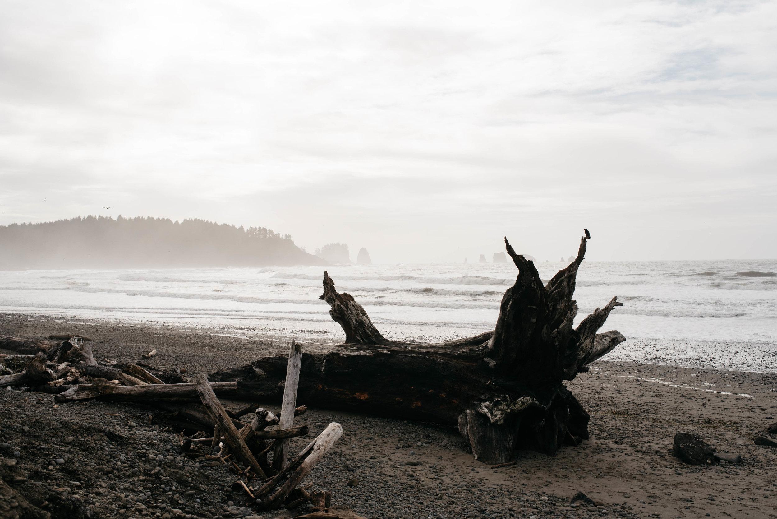 Olympic National Park First Beach Travel photography-1003.jpg