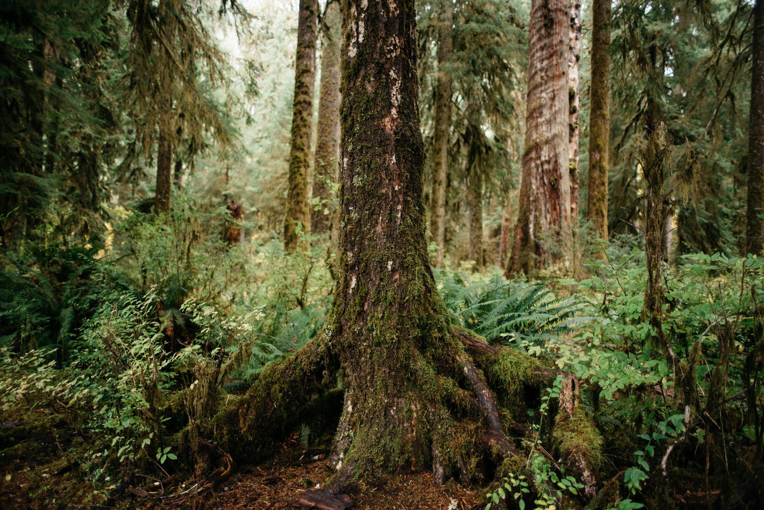 Olympic National Park Hoh Rainforest Travel photography-1001.jpg