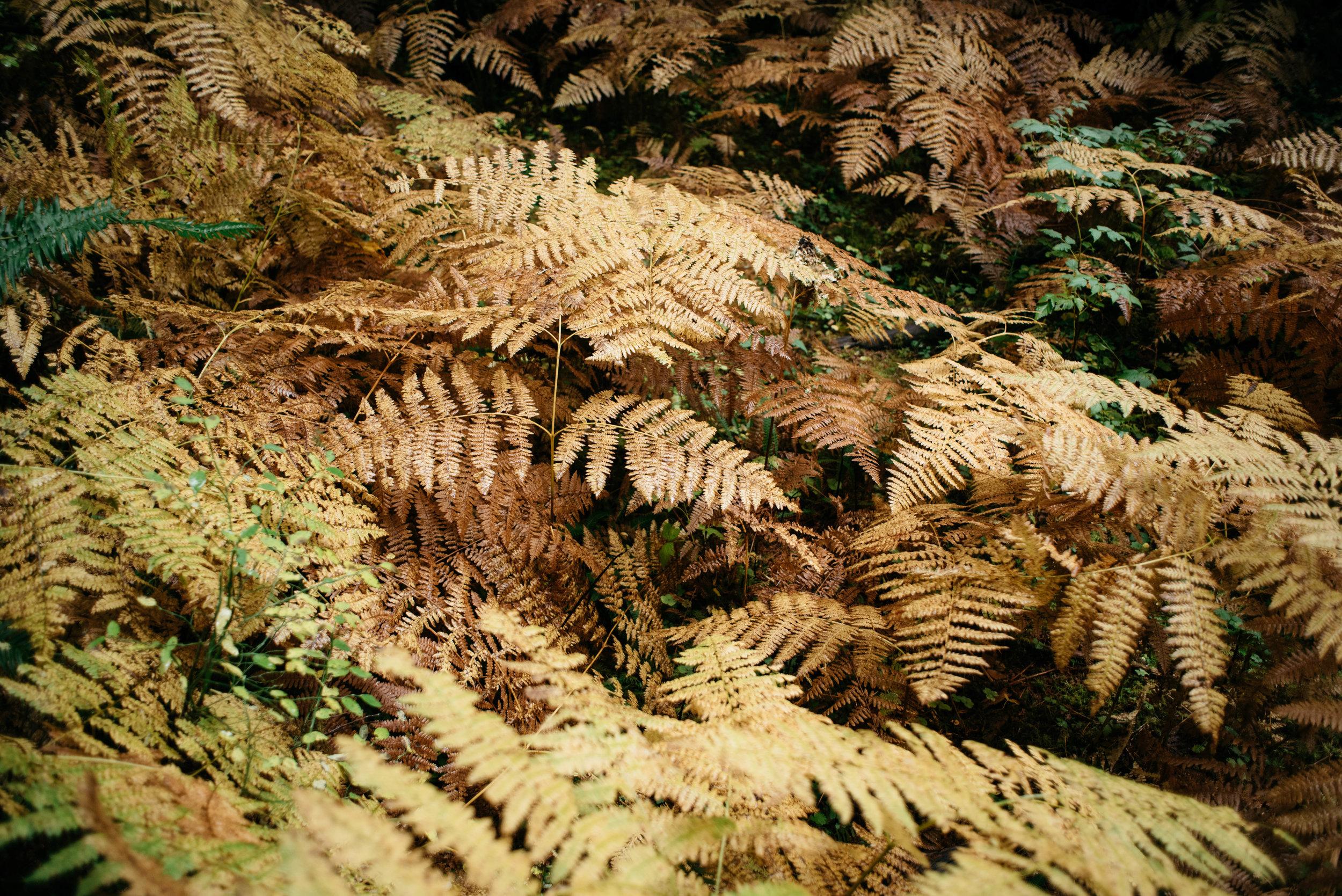 Olympic National Park Hoh Rainforest Travel photography-1002.jpg