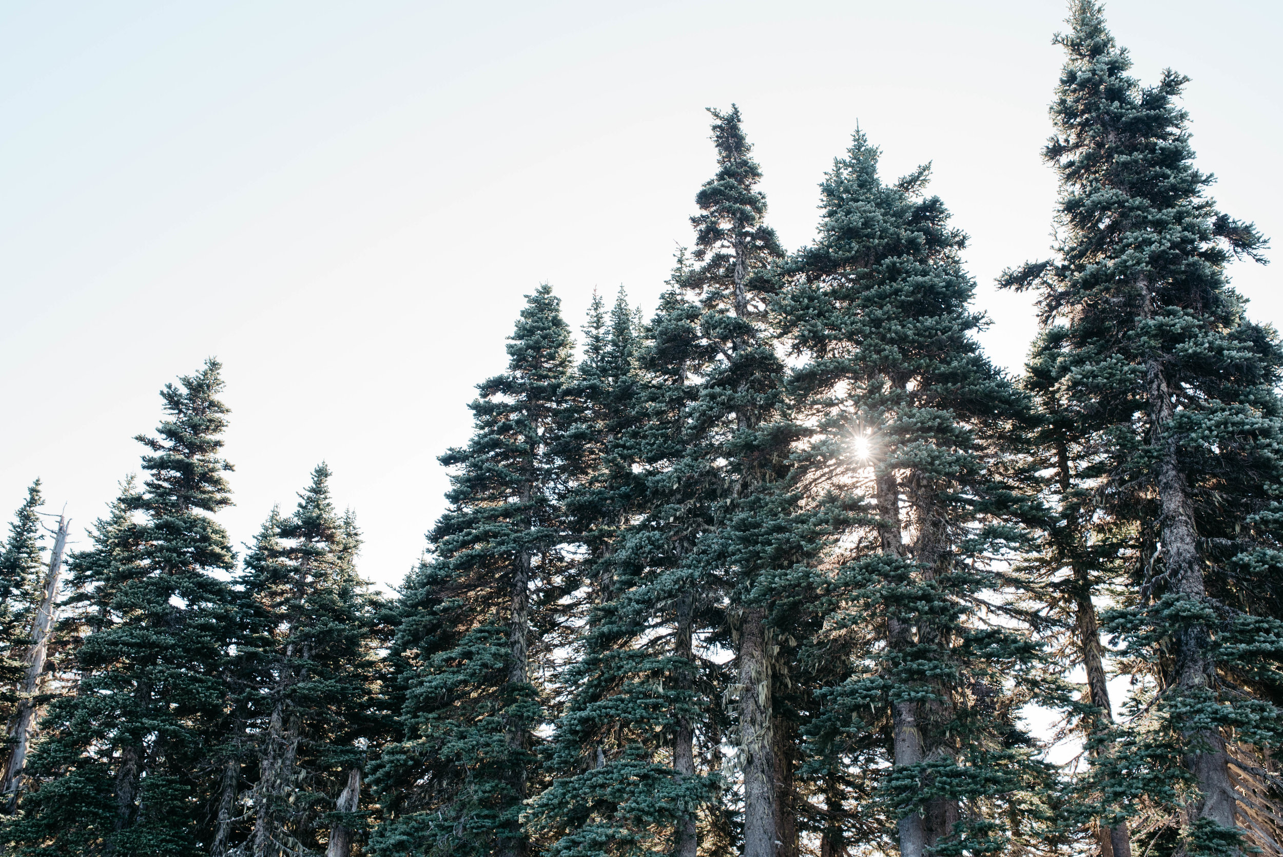Olympic National Park Travel photography mariah fisher-3.jpg