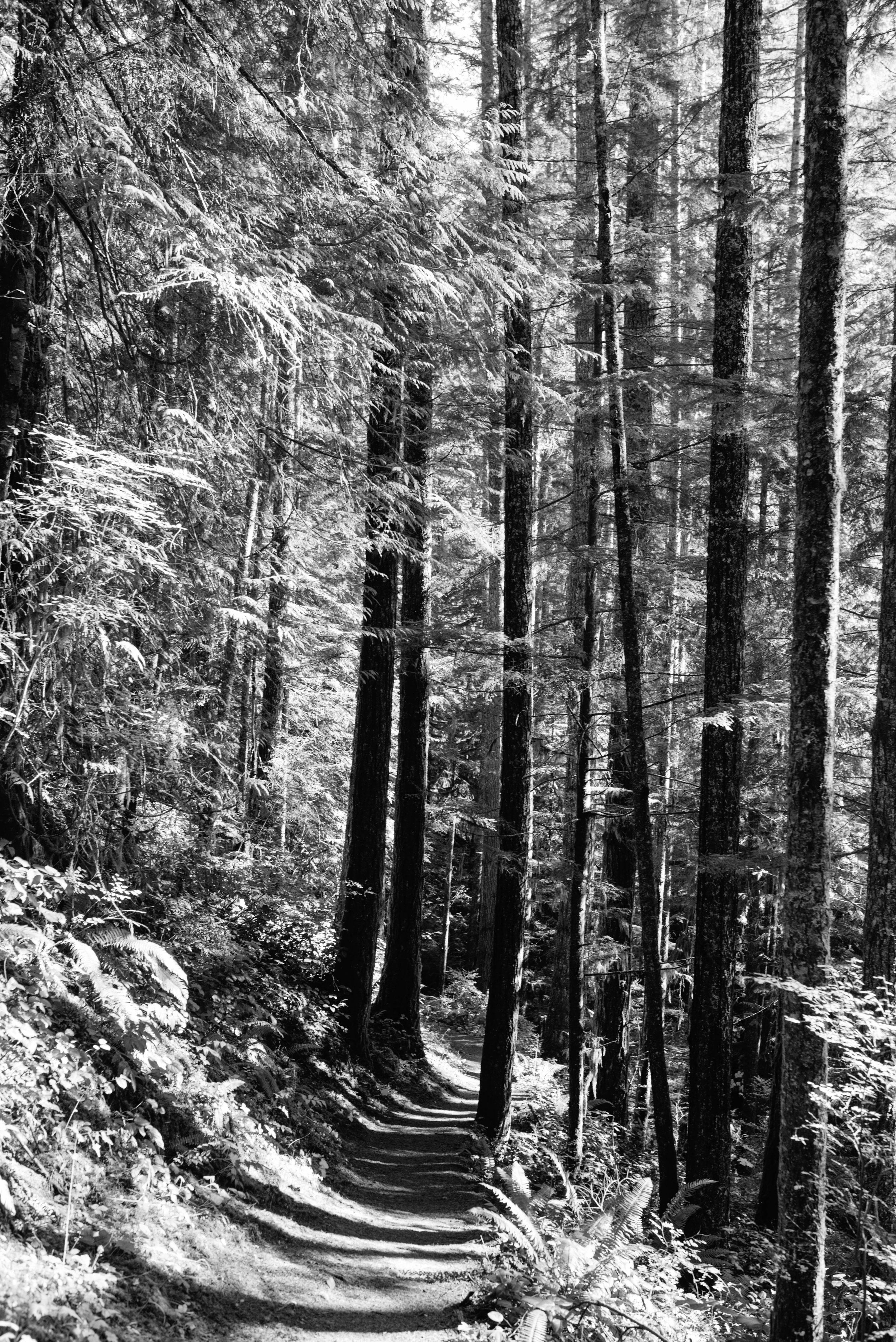 Olympic National Park Travel photography mariah fisher-14.jpg