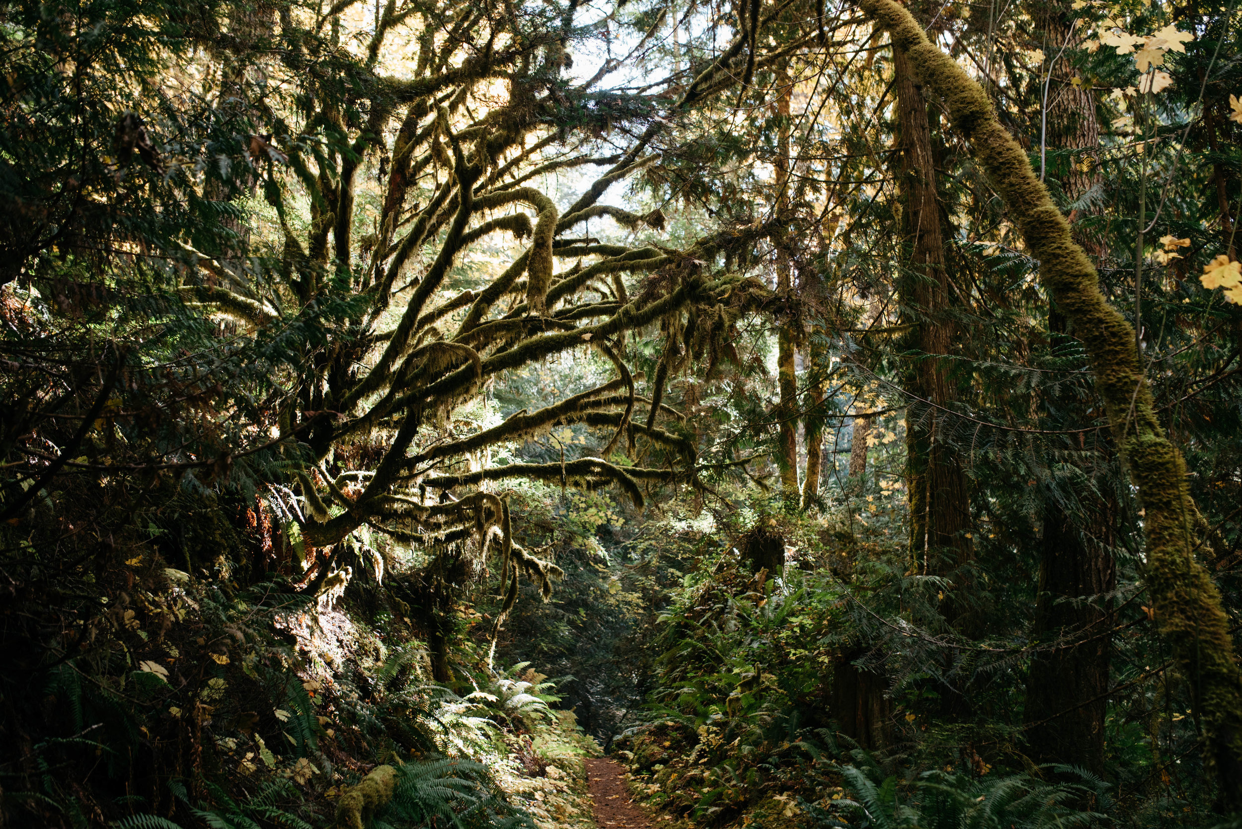 Olympic National Park Travel photography mariah fisher-17.jpg