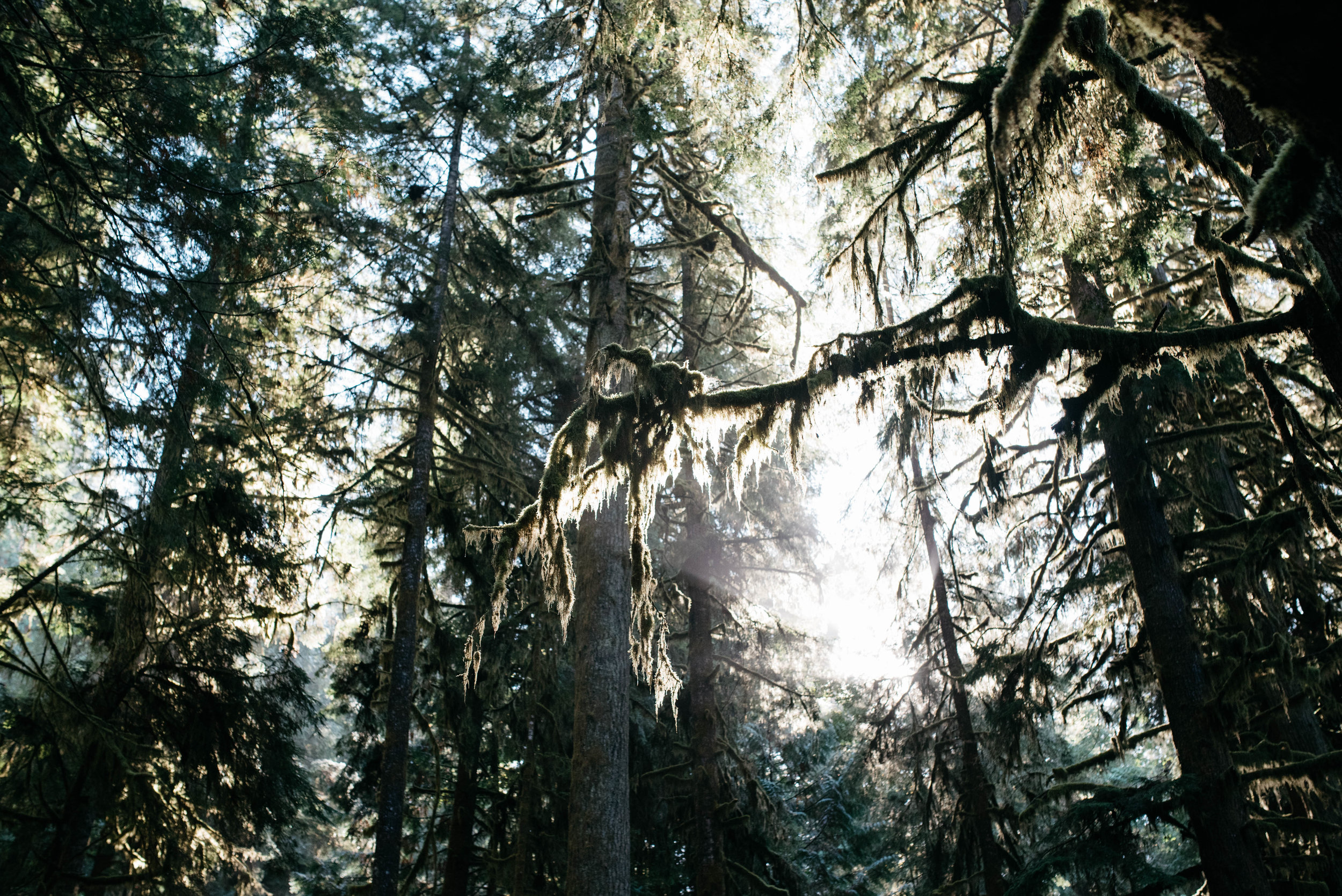 Olympic National Park Travel photography mariah fisher-1.jpg