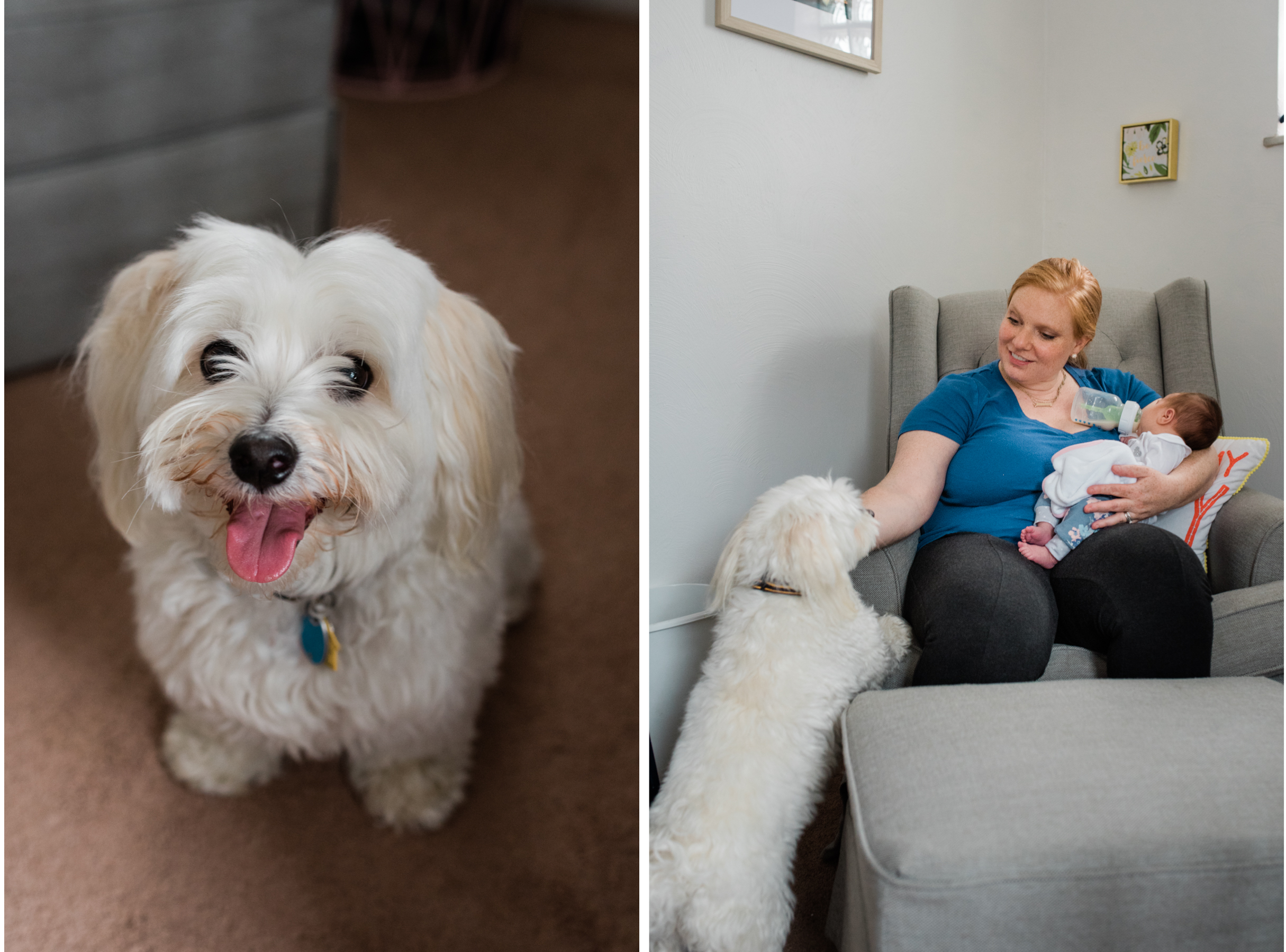 Newborn Lifestyle session with a puppy!  Pittsburgh photographer, Mariah Fisher.jpg
