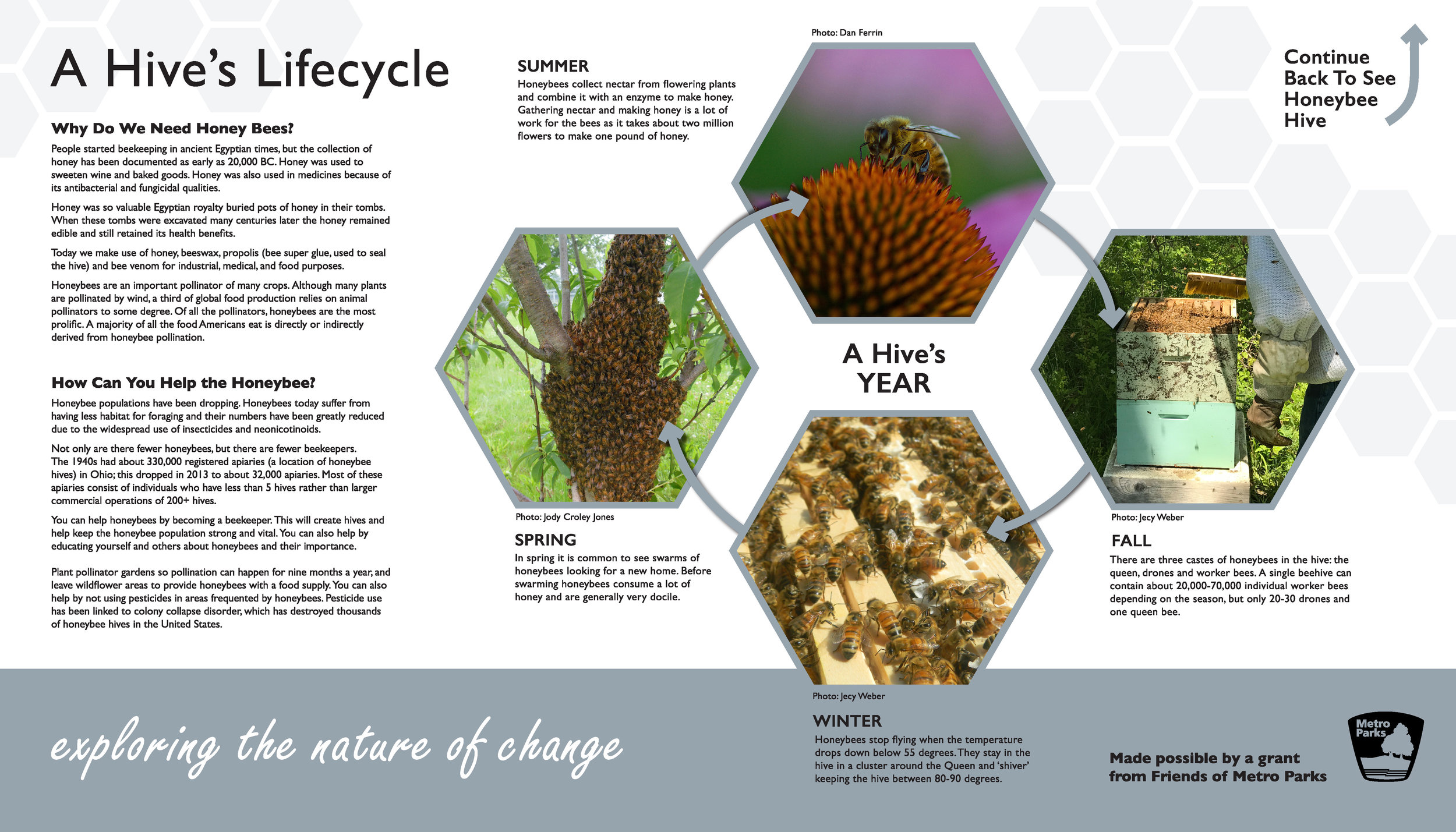 A Hive's Lifecycle-For Print.jpg