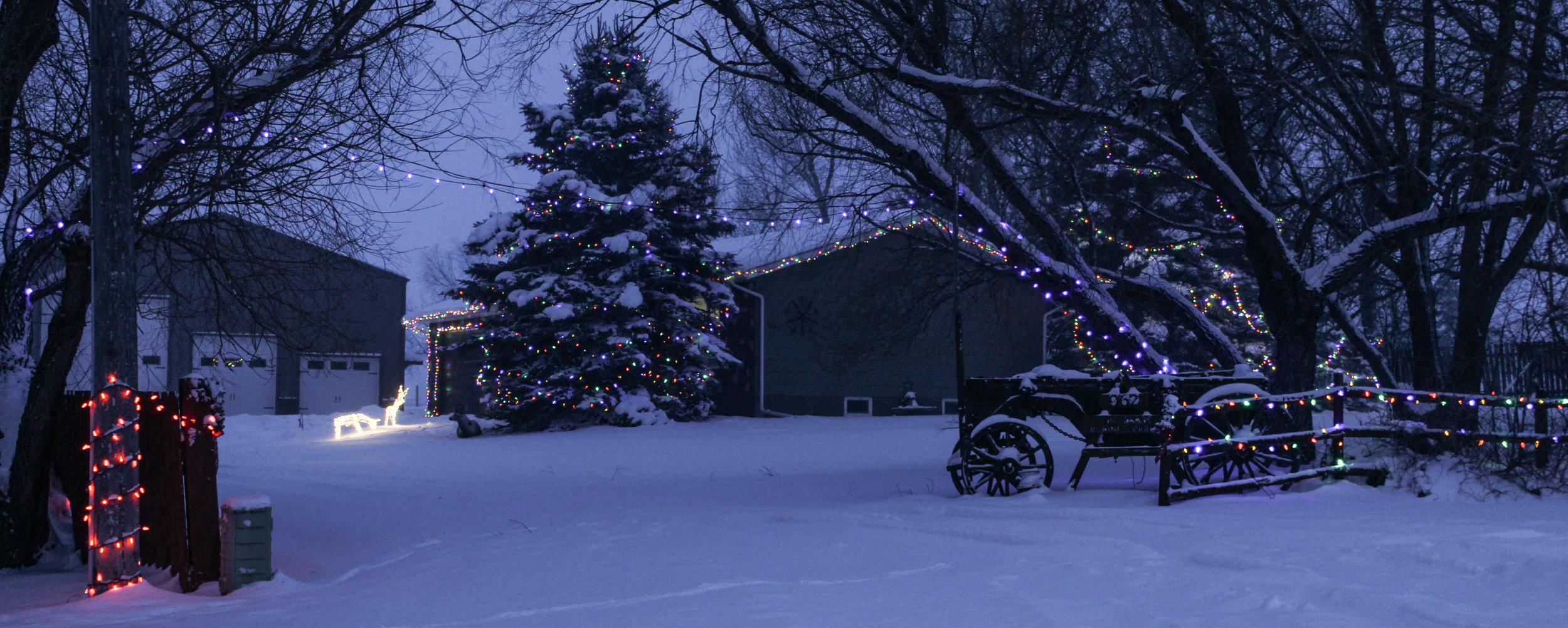 Winter Lights Winners (1 of 3).jpg