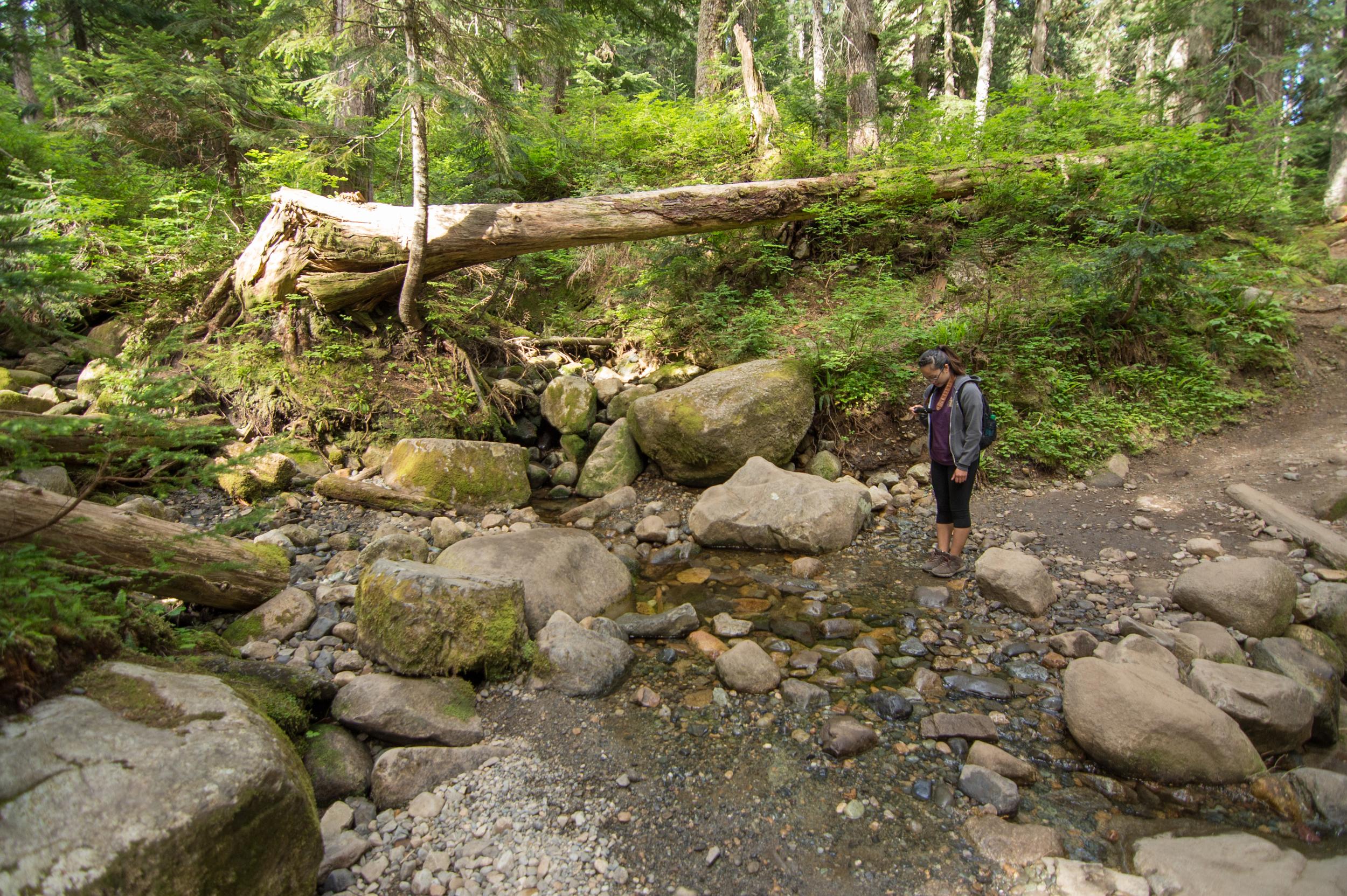 Mount_Pilchuck-7.jpg