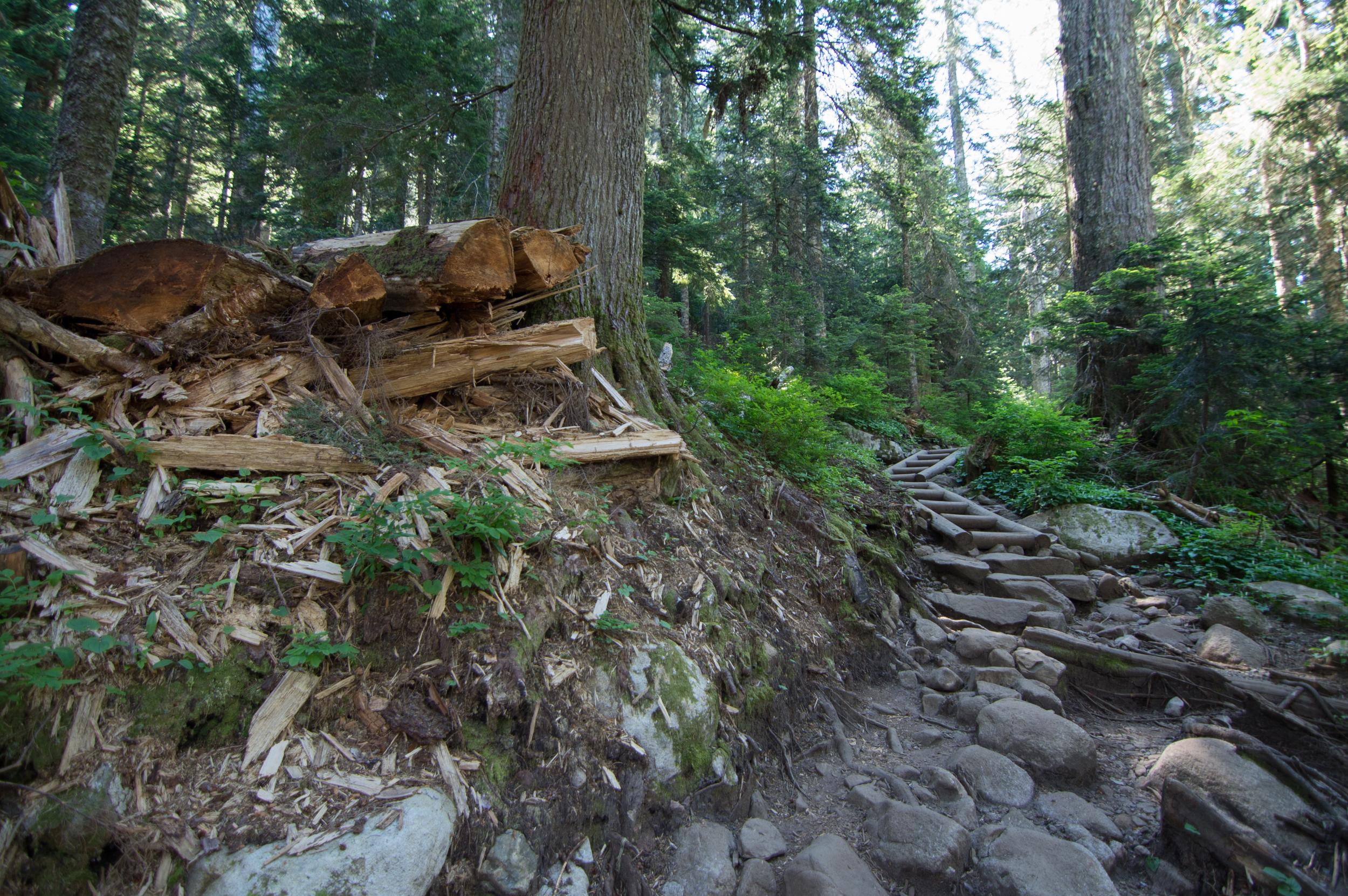 Mount_Pilchuck-9.jpg