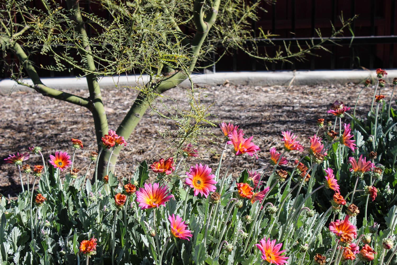 bellflower-lindale-7.jpg