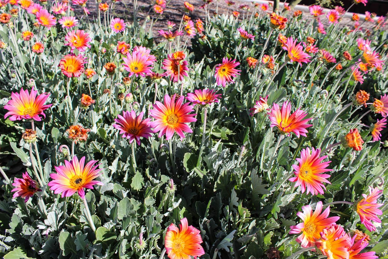 bellflower-lindale-6.jpg