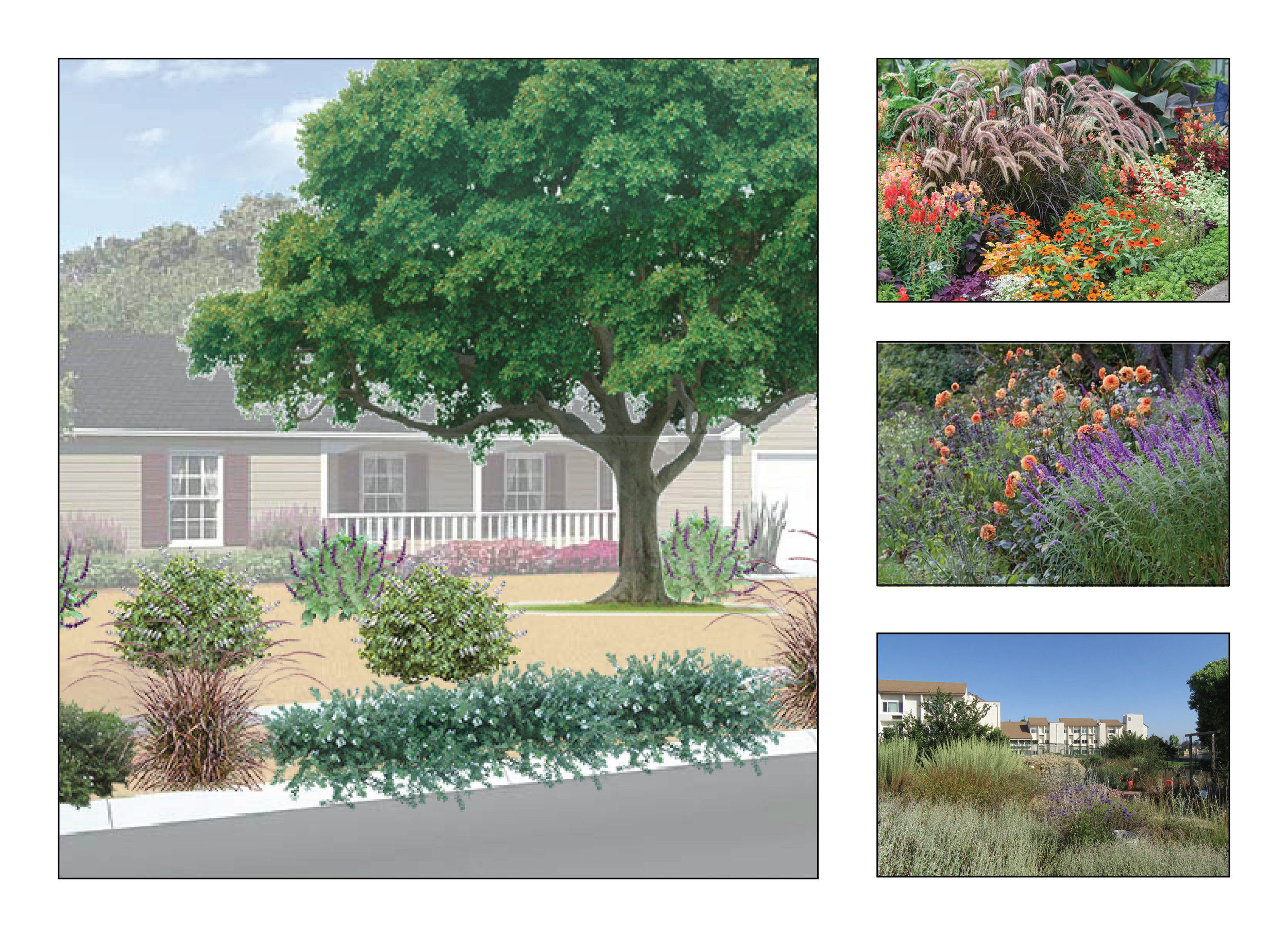 California Friendly Garden-02.jpg