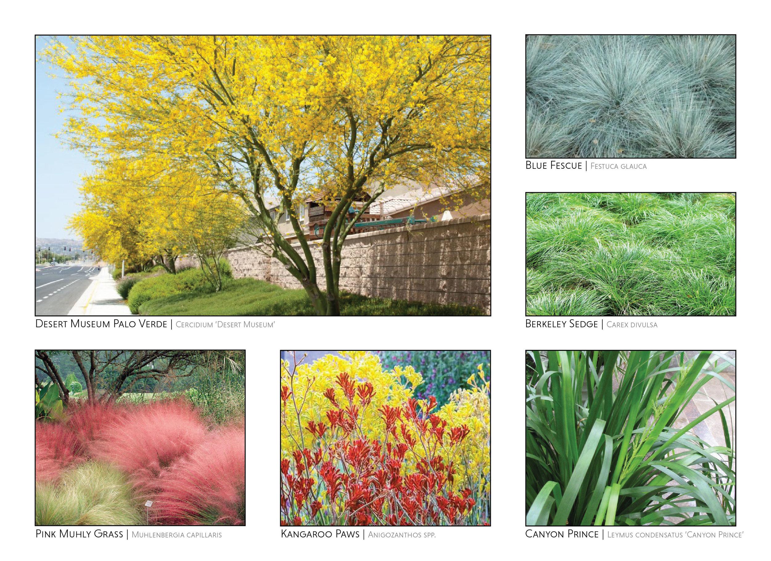 Grassland Garden-01.jpg