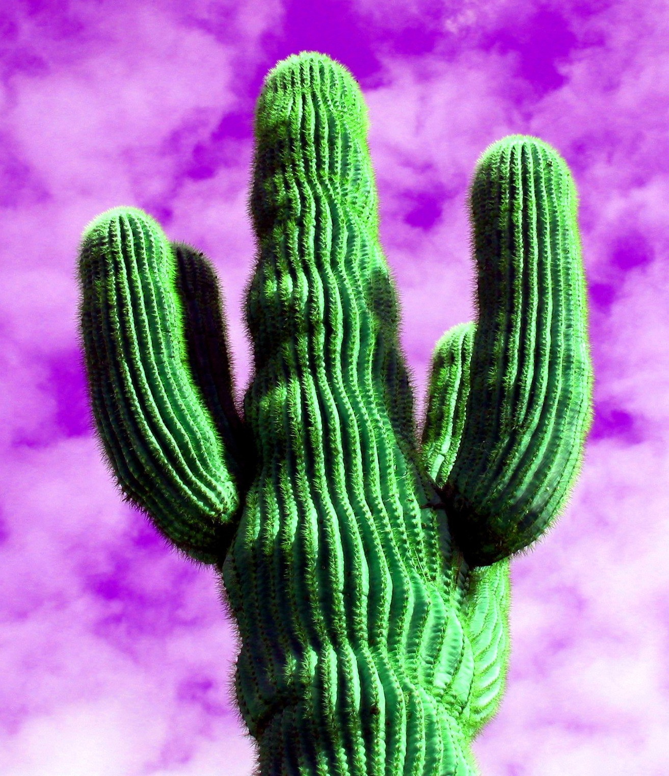 Hot Saguaro.jpg