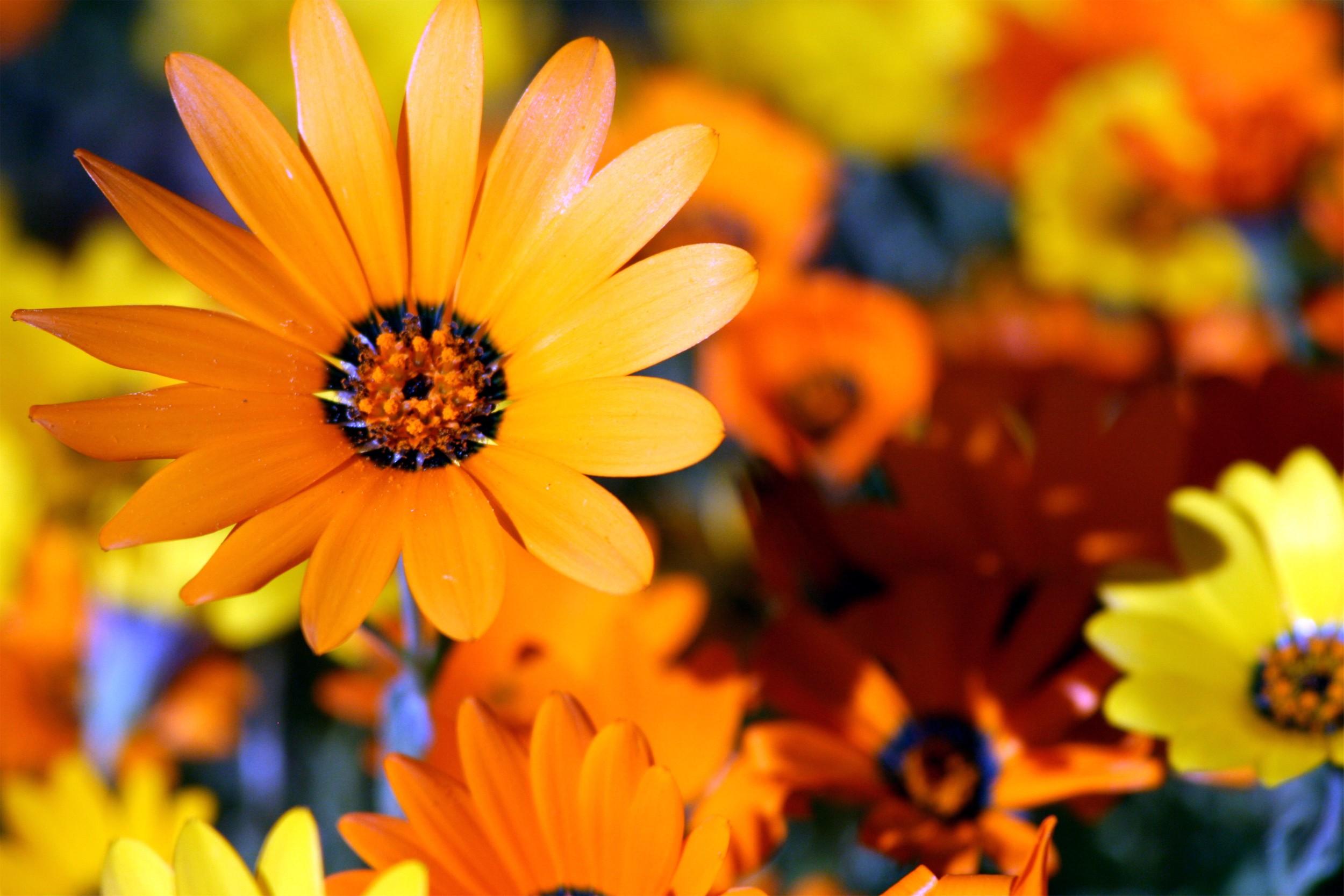 Daisy Delight.jpg