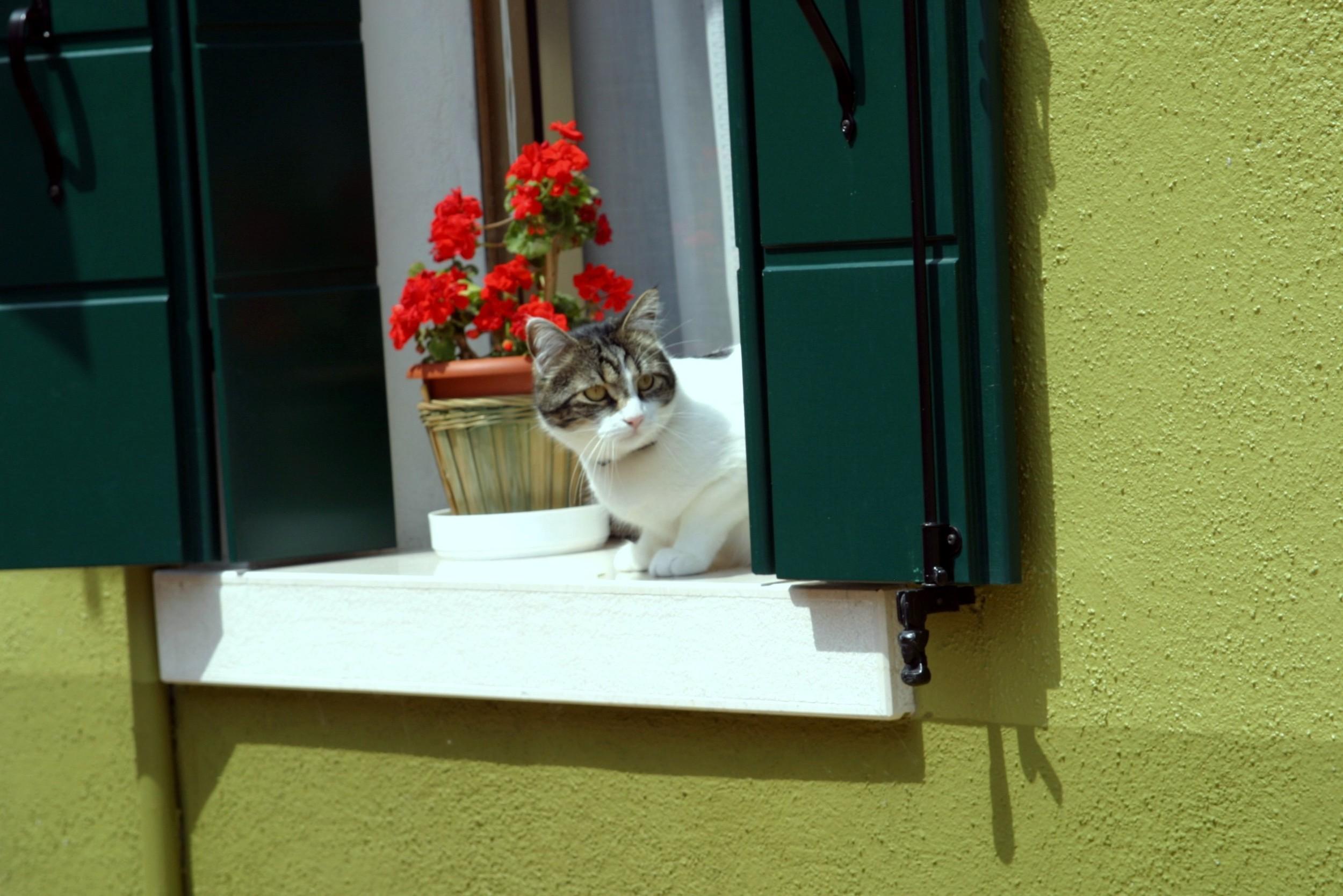 Burano Cat.JPG