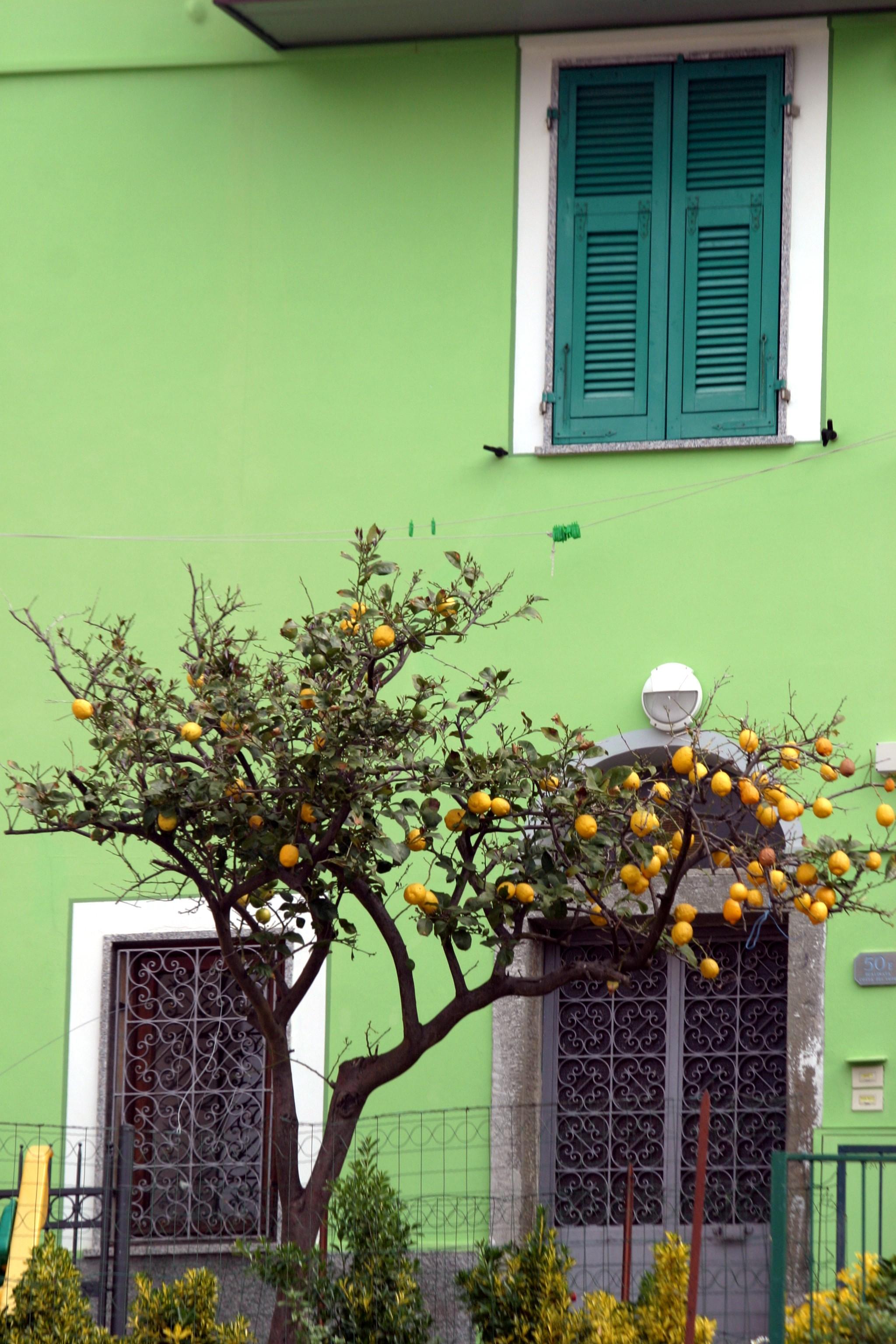 Riomaggiore Lemoni.JPG