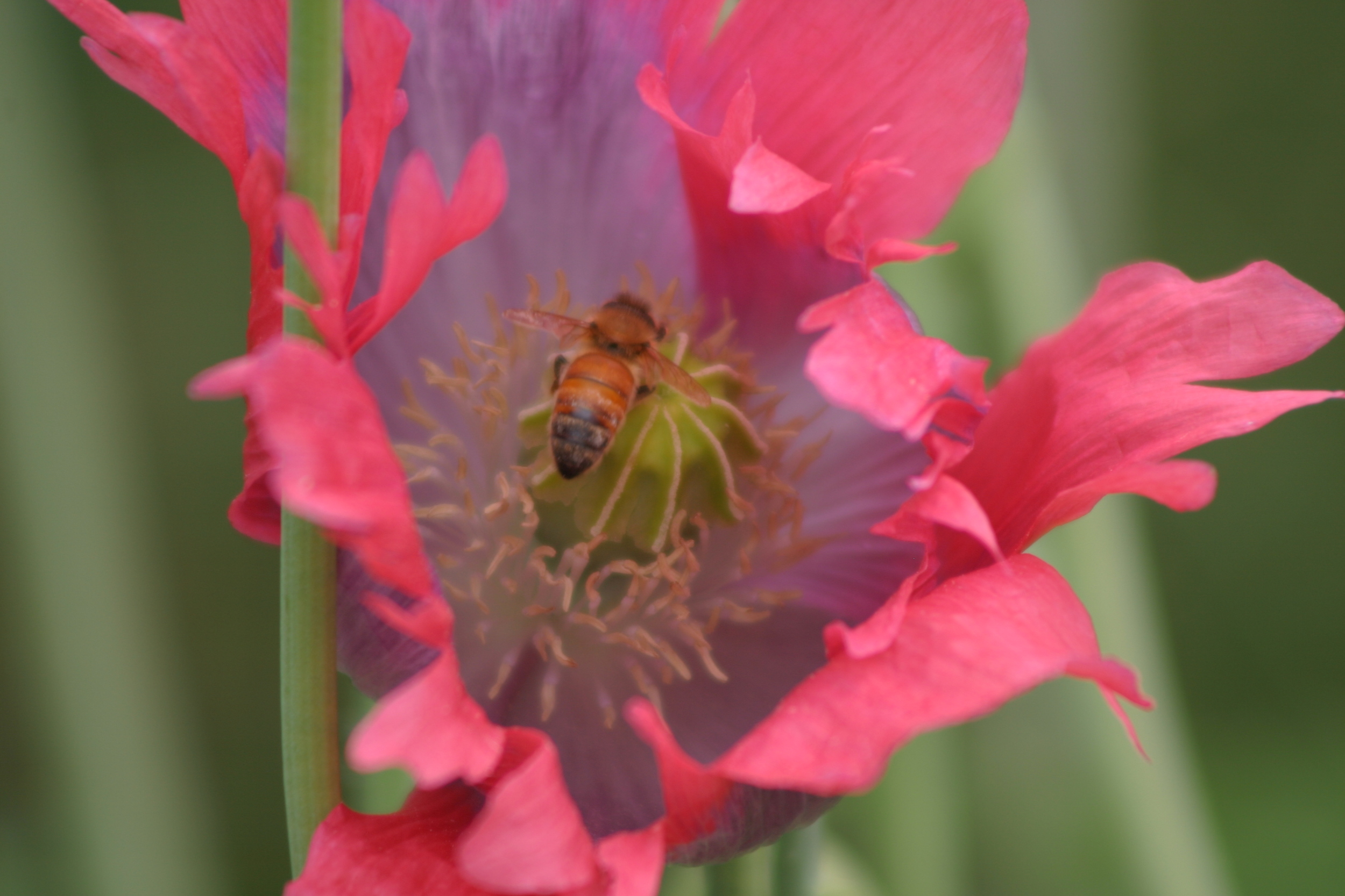 Poppy and Bee.JPG