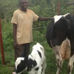 Inganire-herdsman-and-calf-150x150.png