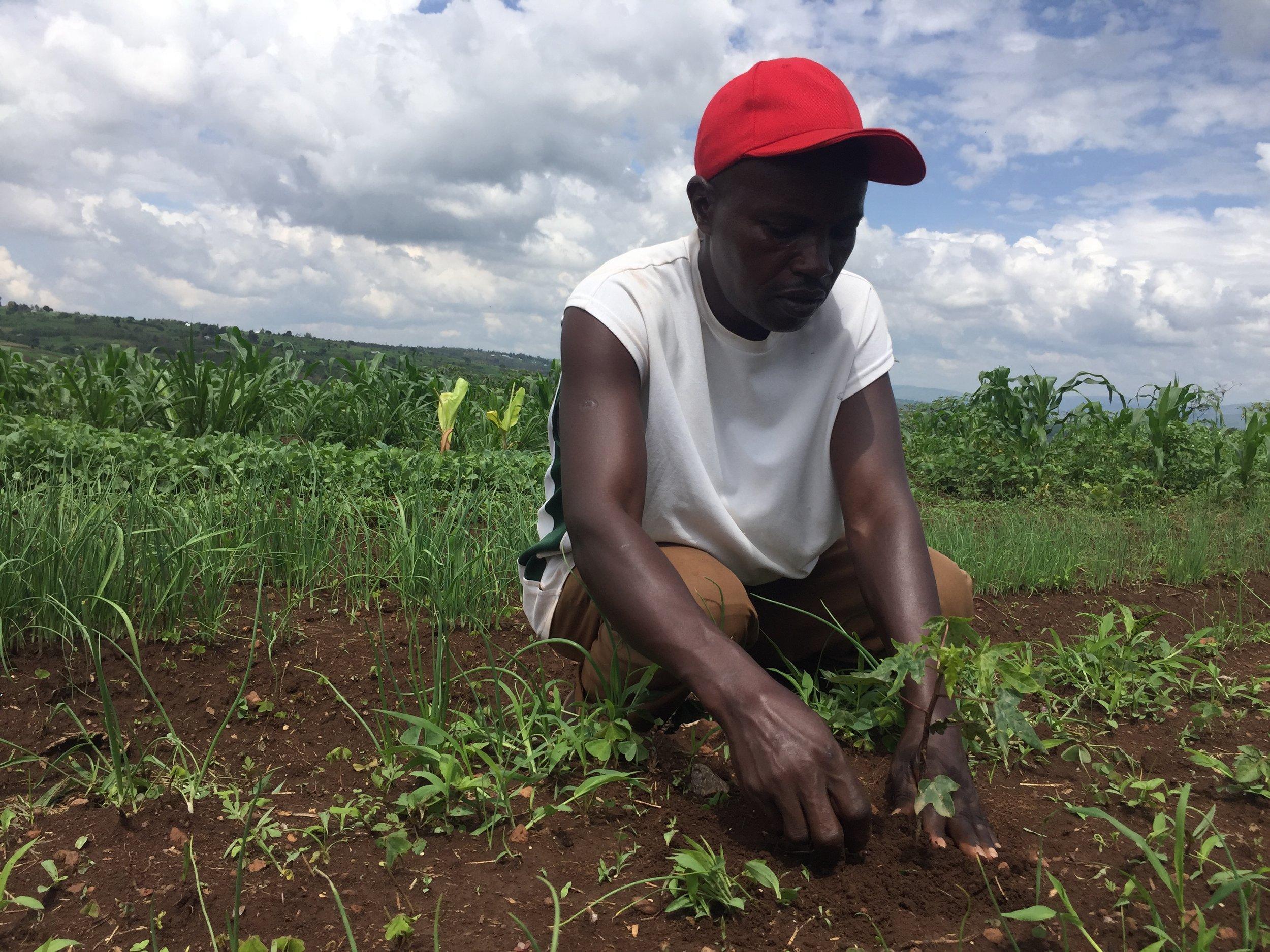 Karangwa planting a papaya.JPG
