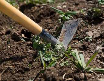 DISTRICT School Garden Clean Up Day!  On May 16 from 3:00 pm - 6:00 pm, we will be having a clean up day for the district school garden. We will do the following. 1. Pull vegetation out of beds and turn the soil in the beds. 2. Lay down cardboard and spread wood chips around beds. 3. Weed strawberry beds. 4. Plant iris bulbs. 5. Mow the grass. Please come when you can. Any help is greatly appreciated. Please bring a shovel, rake, garden gloves, and anything else that would help accomplish the tasks listed above. THANK YOU from our kids! The district school garden is located south east of the high school tennis courts. Take the path on the south side of tennis courts and look to the south . You can't miss the garden. Any questions, please call 262-626-8427 x2323 and ask for Carol.