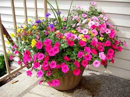 PTO is getting things rolling for our Annual Spring Flower Sale and you should be seeing those forms coming home soon. This is a great fundraiser for our school, all orders arrive for pick up on May 12th  in time for Mother's Day! More info to come – tell your friend and family!