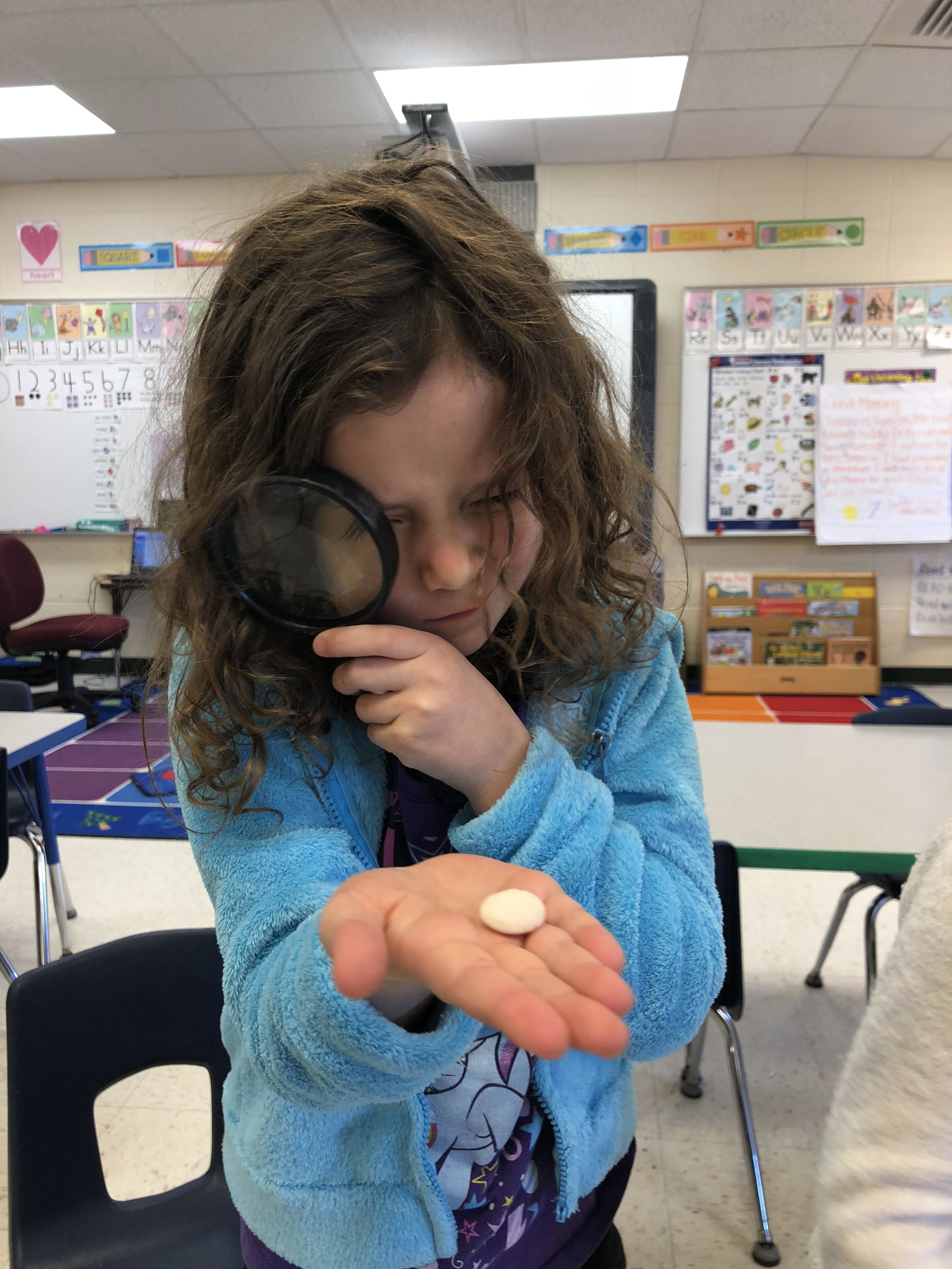 taking a close look at a lima bean seed
