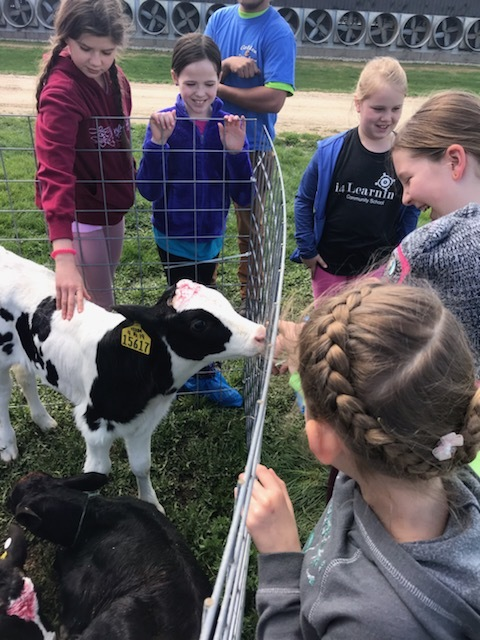 3-5 Student visited the Golden E Dairy on a Field Trip in connection with their Agriculture and Commodities Project!