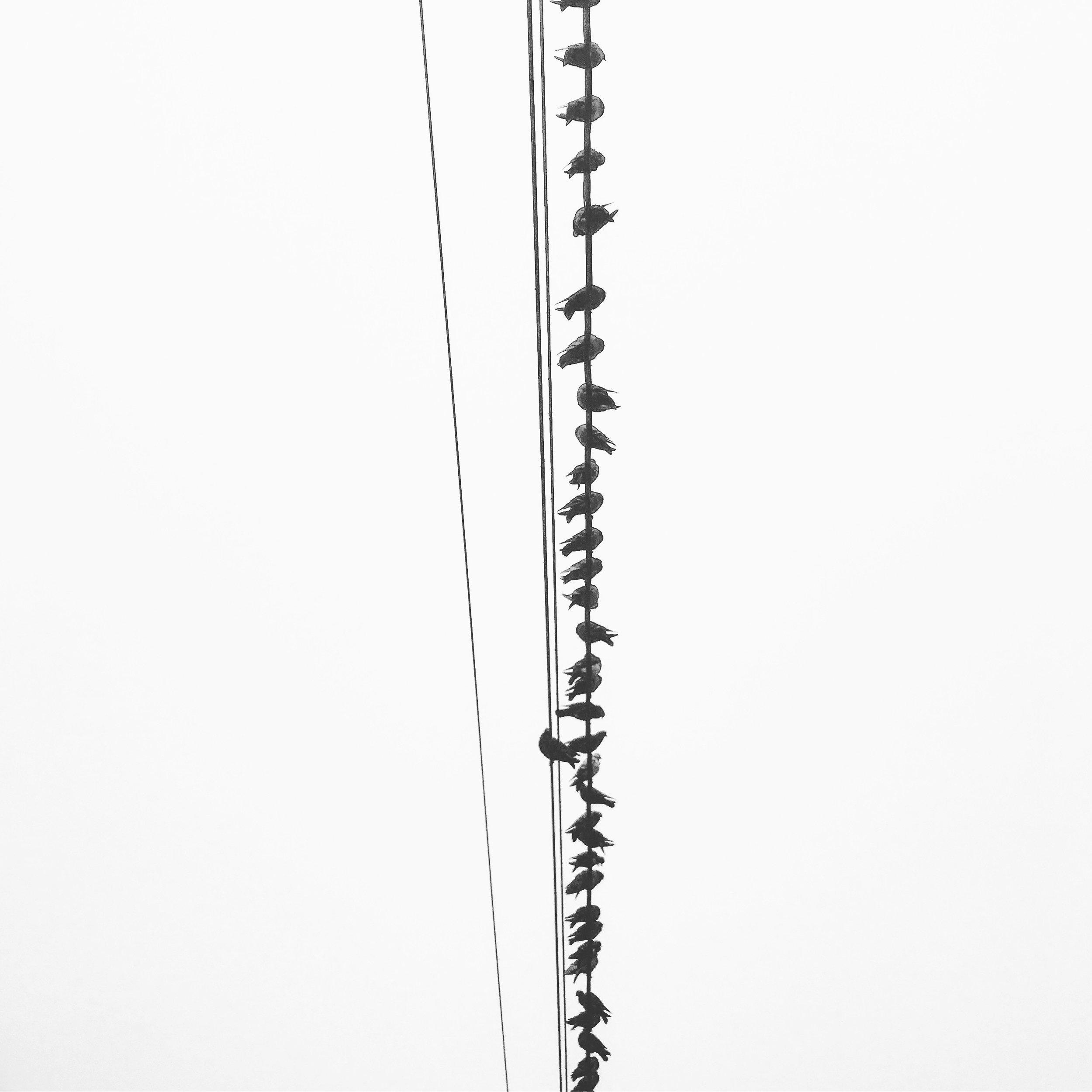 birds bones.jpg