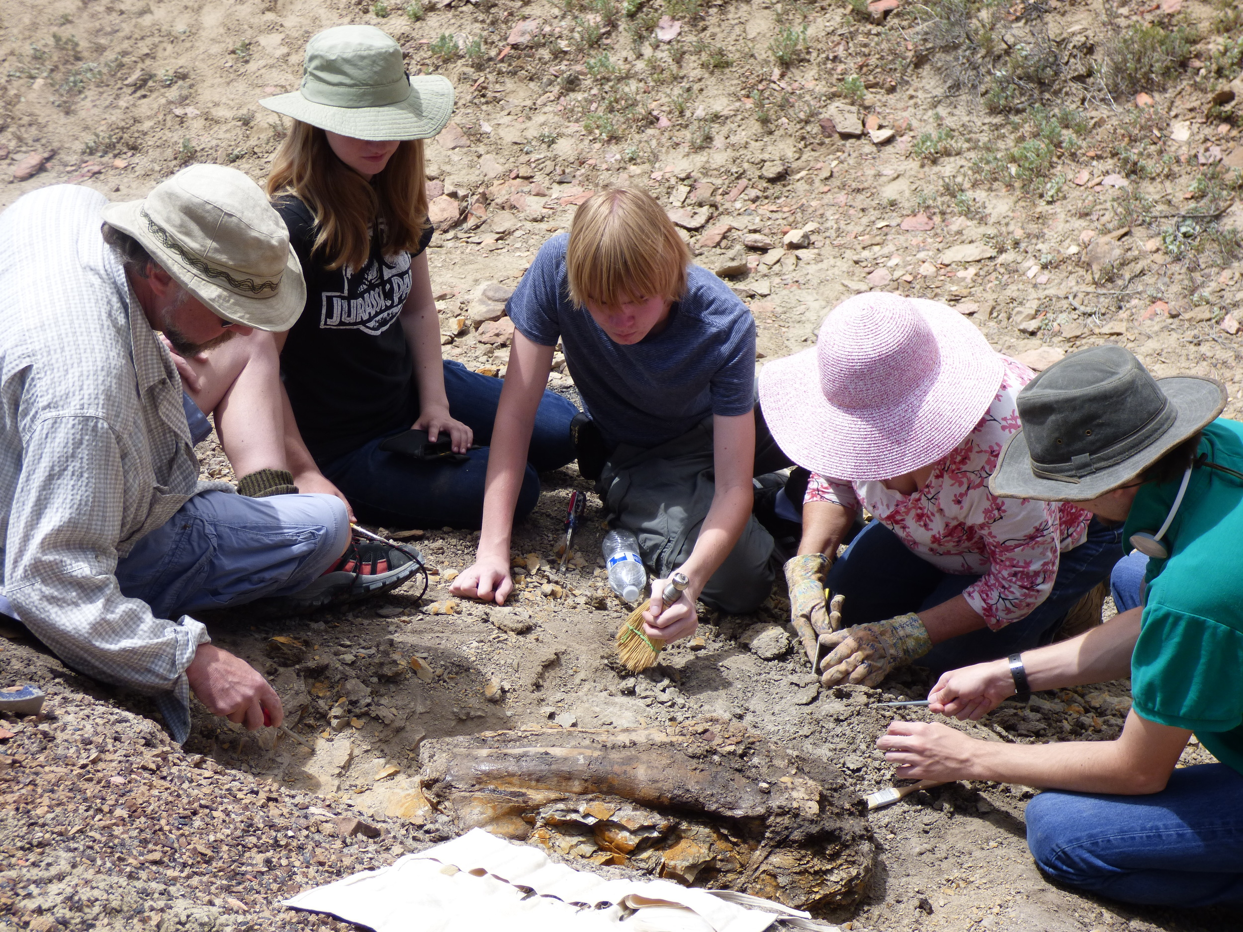 SPS and Venture Crew excivate a compound fossil