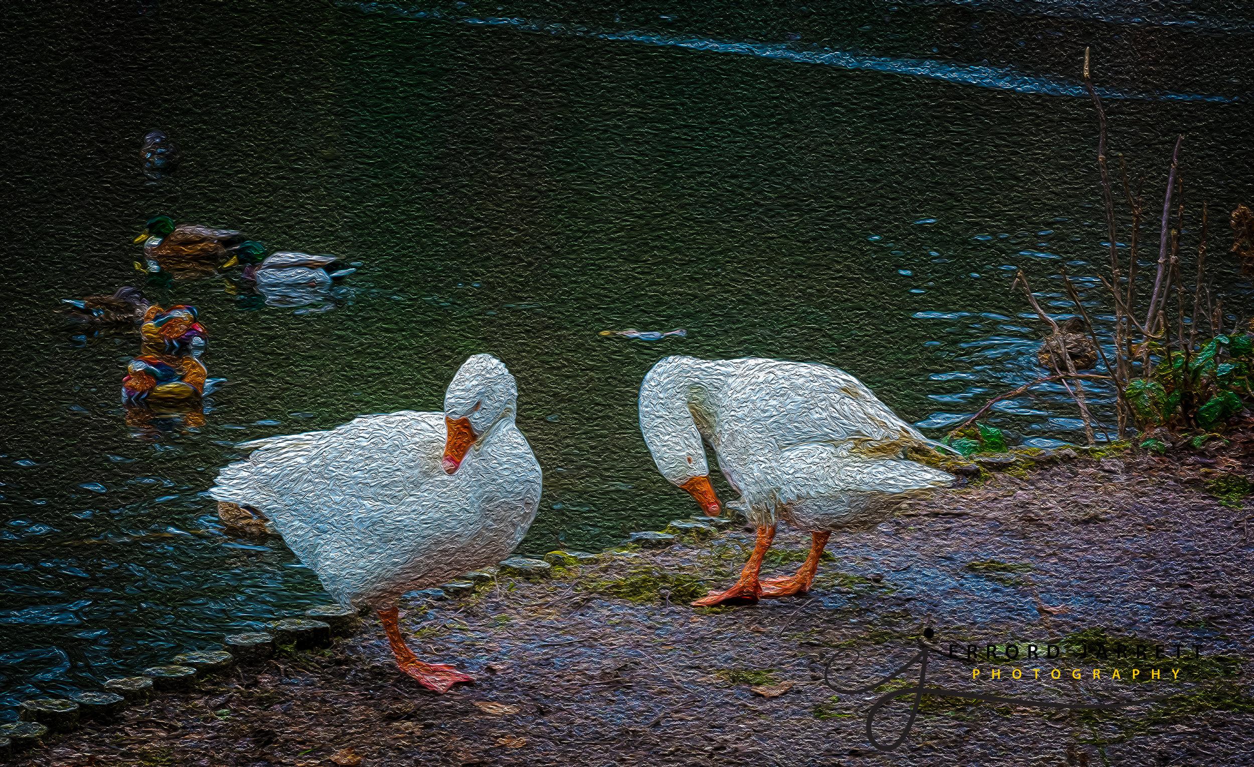 Geese Keston Common