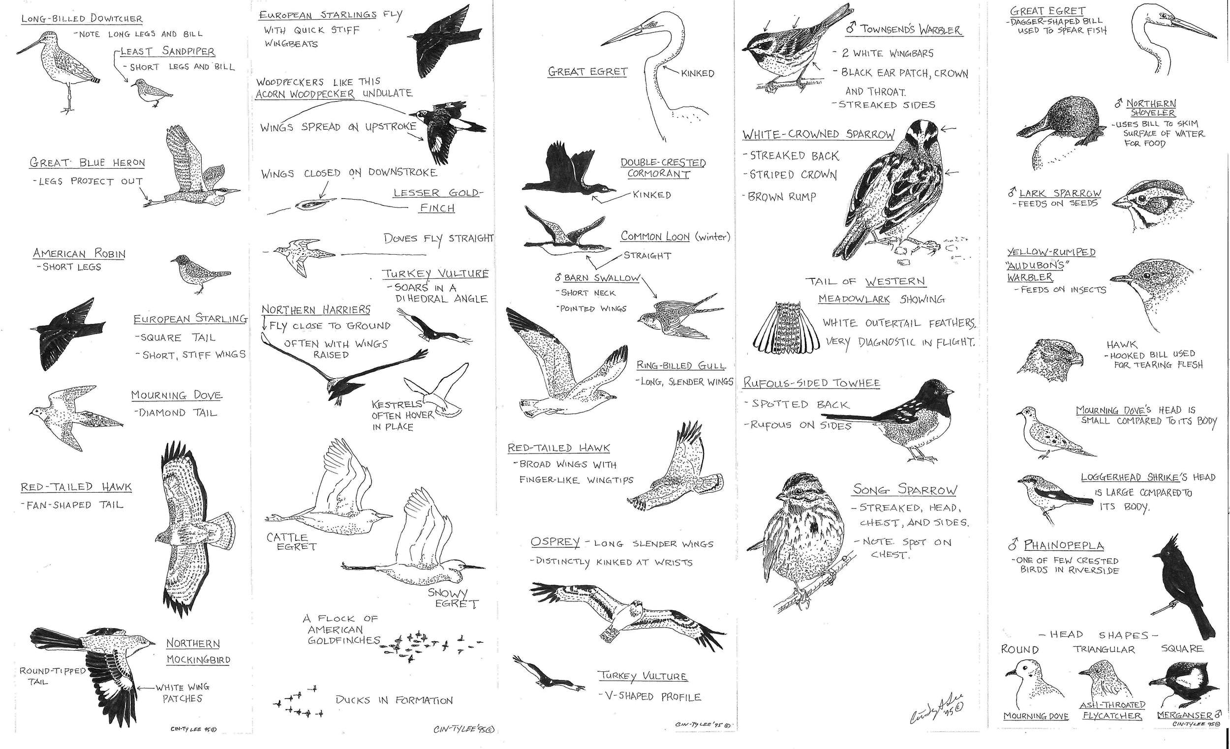 Lee-Bird-Guide1_Page_1.jpg