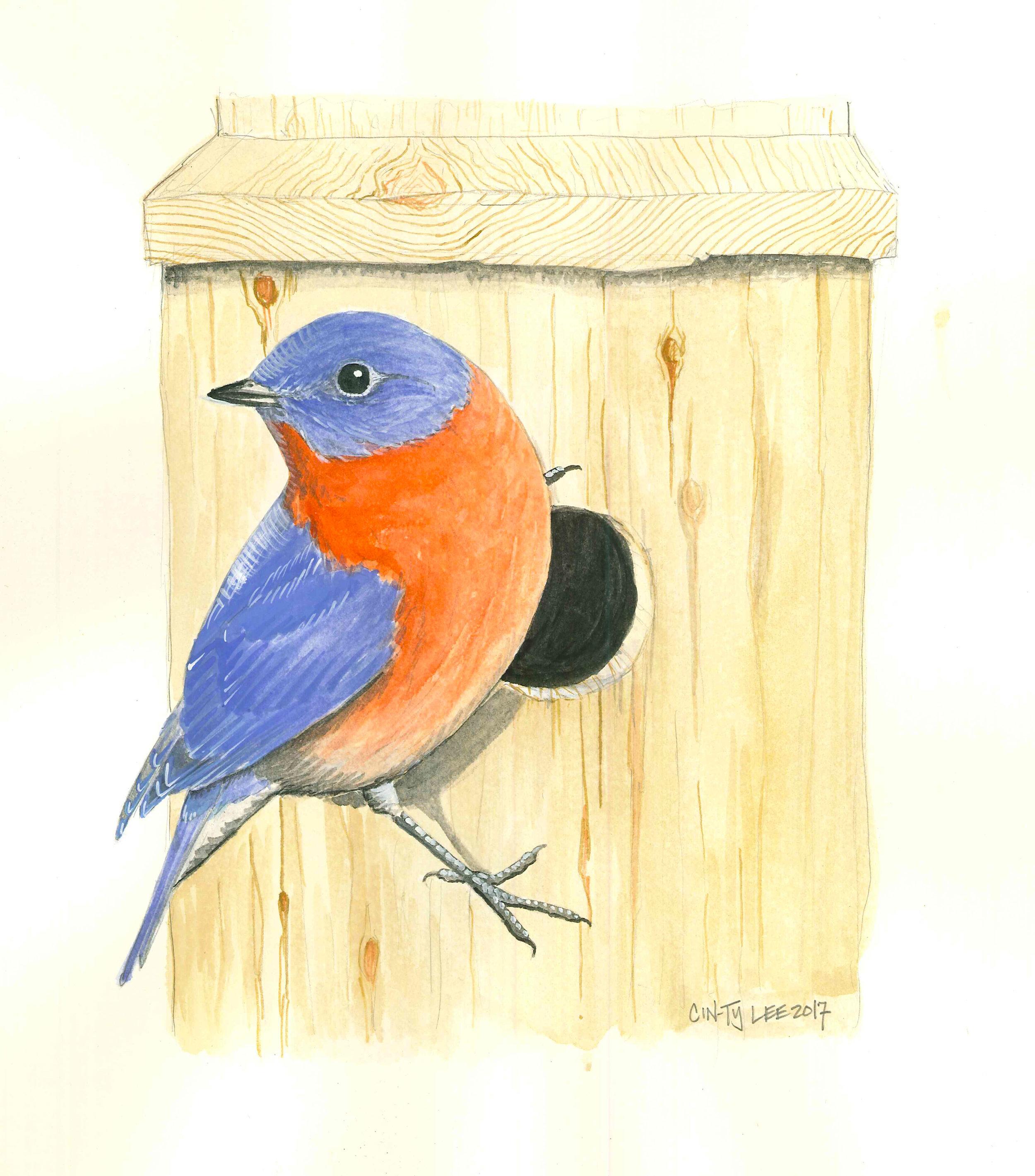 EasternBluebird-Box.jpg