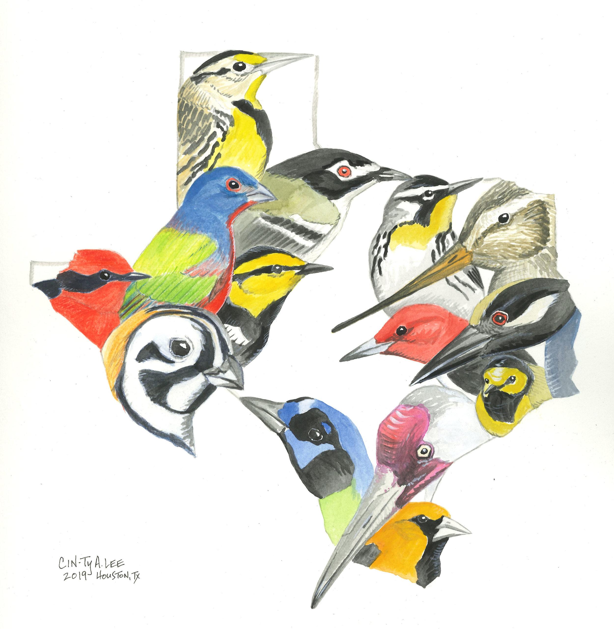 Texas Birds