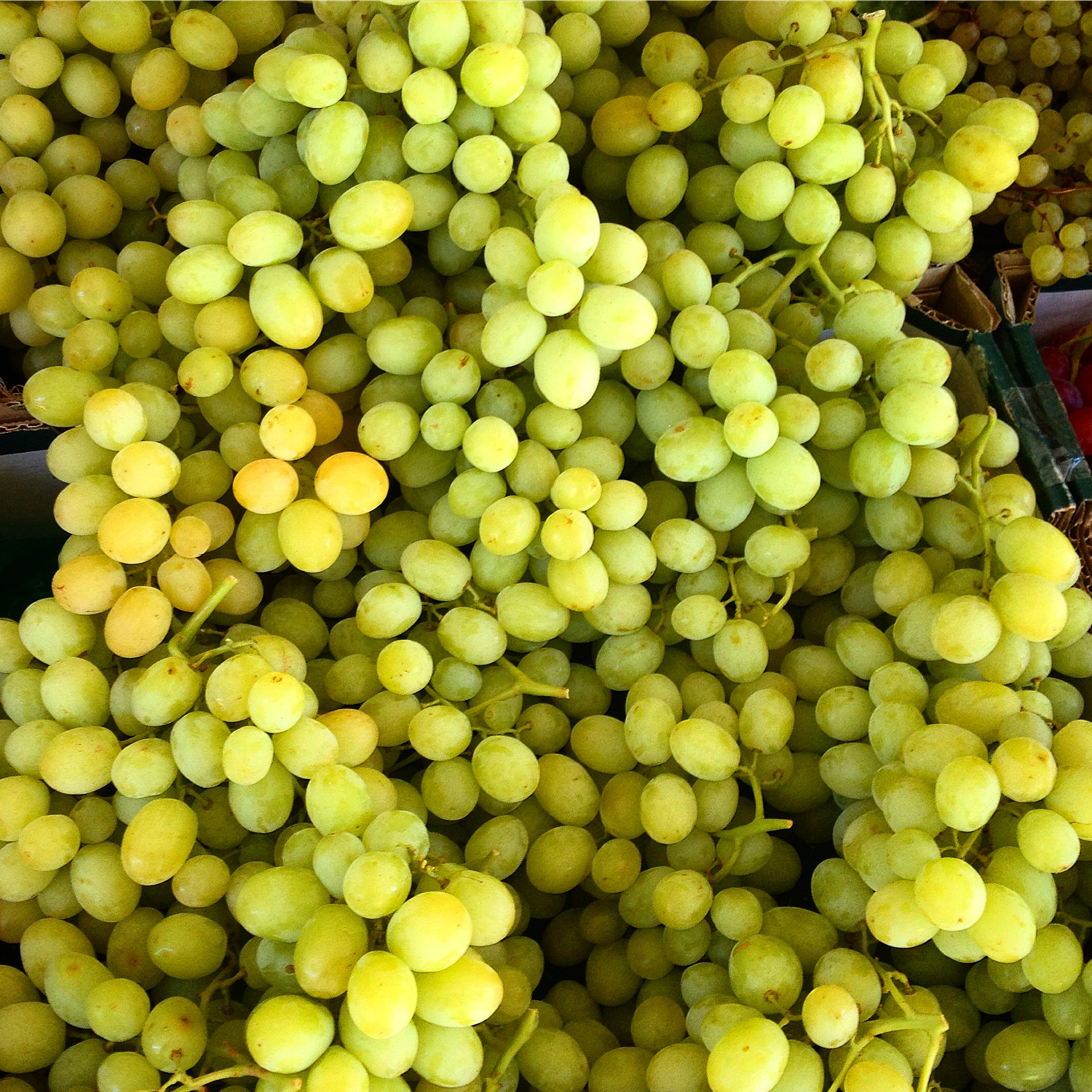 Seedless White Grapes