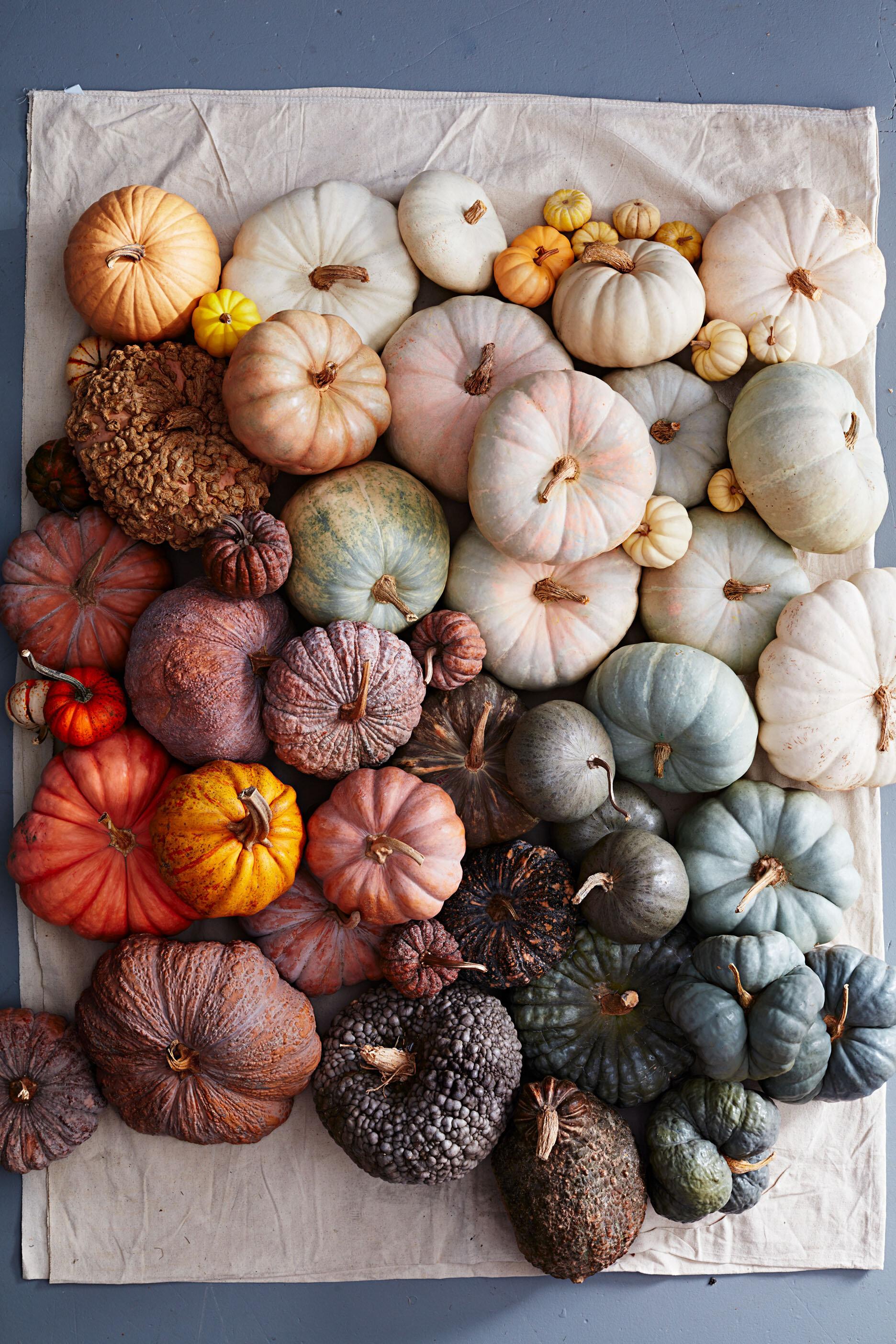 batch-pumpkins-423-MAIN-d112851_w20copy.jpg