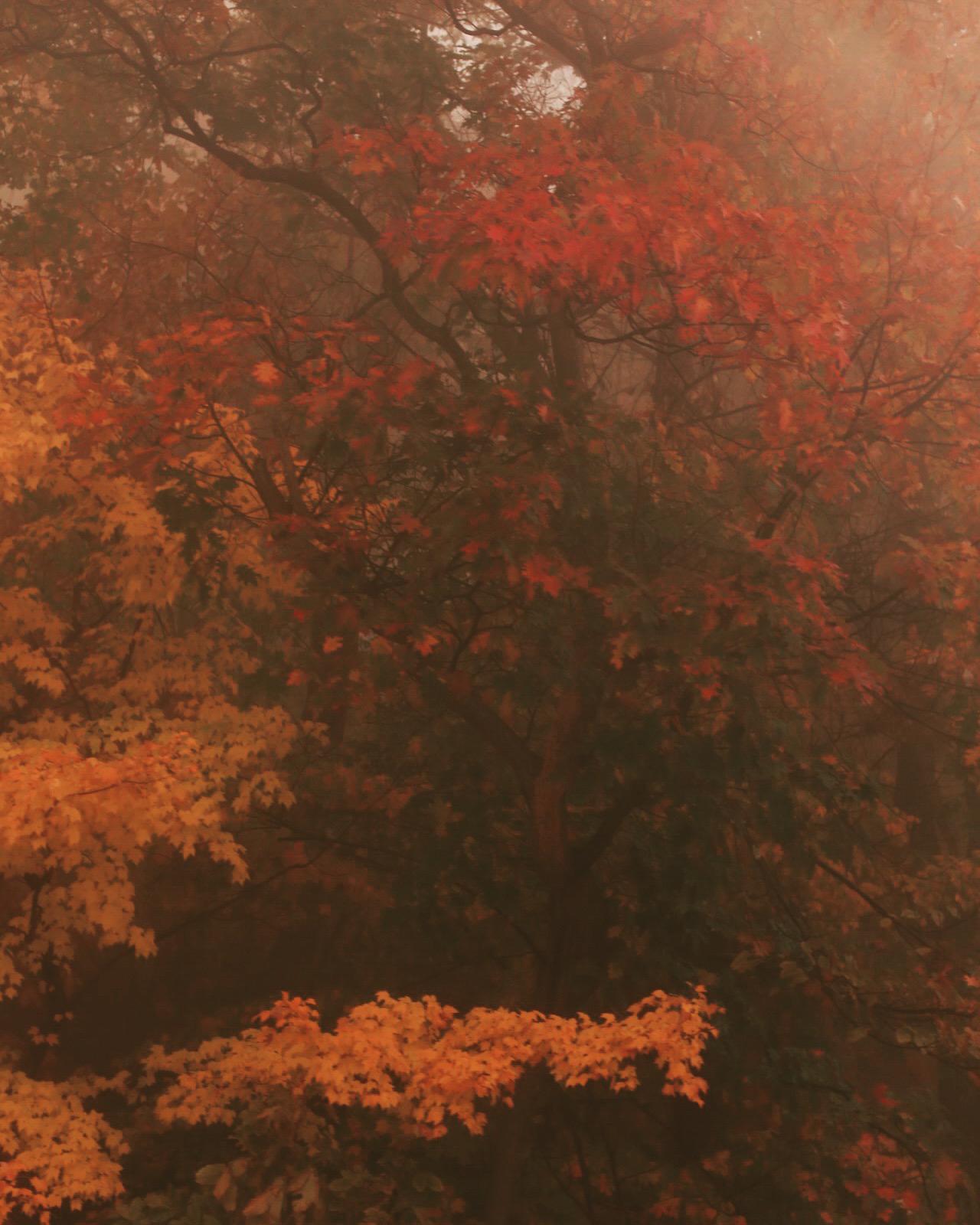 Fall_North_Carolina_Charlotte_Photographer-2-2.jpg