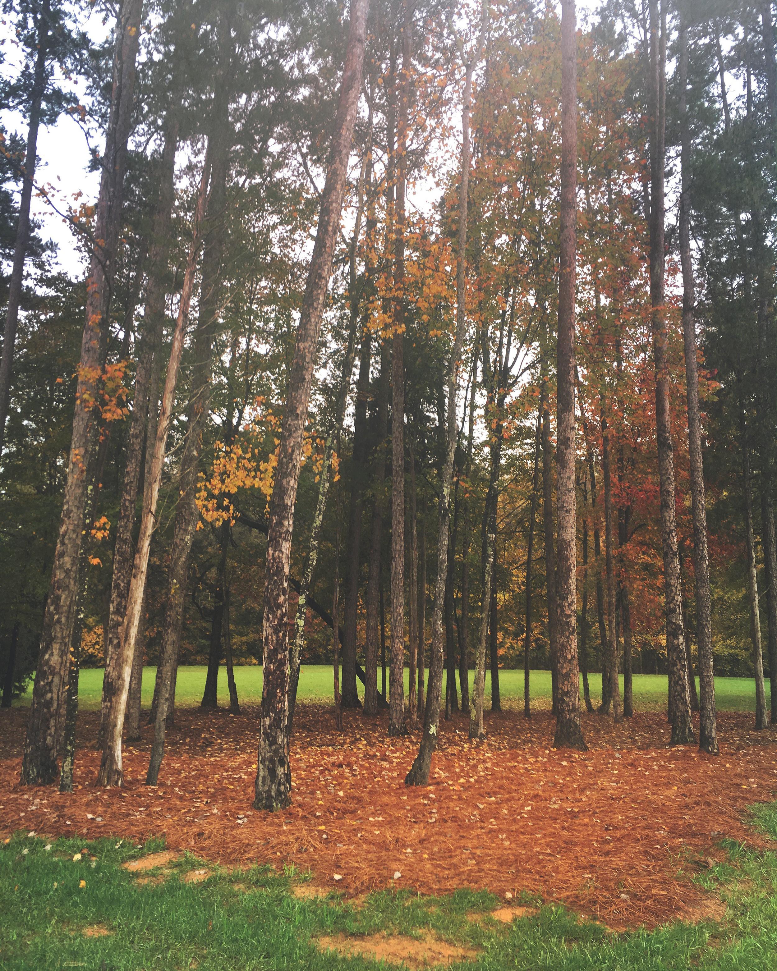 Fall_North_Carolina_Charlotte_Photographer-13-2.jpg
