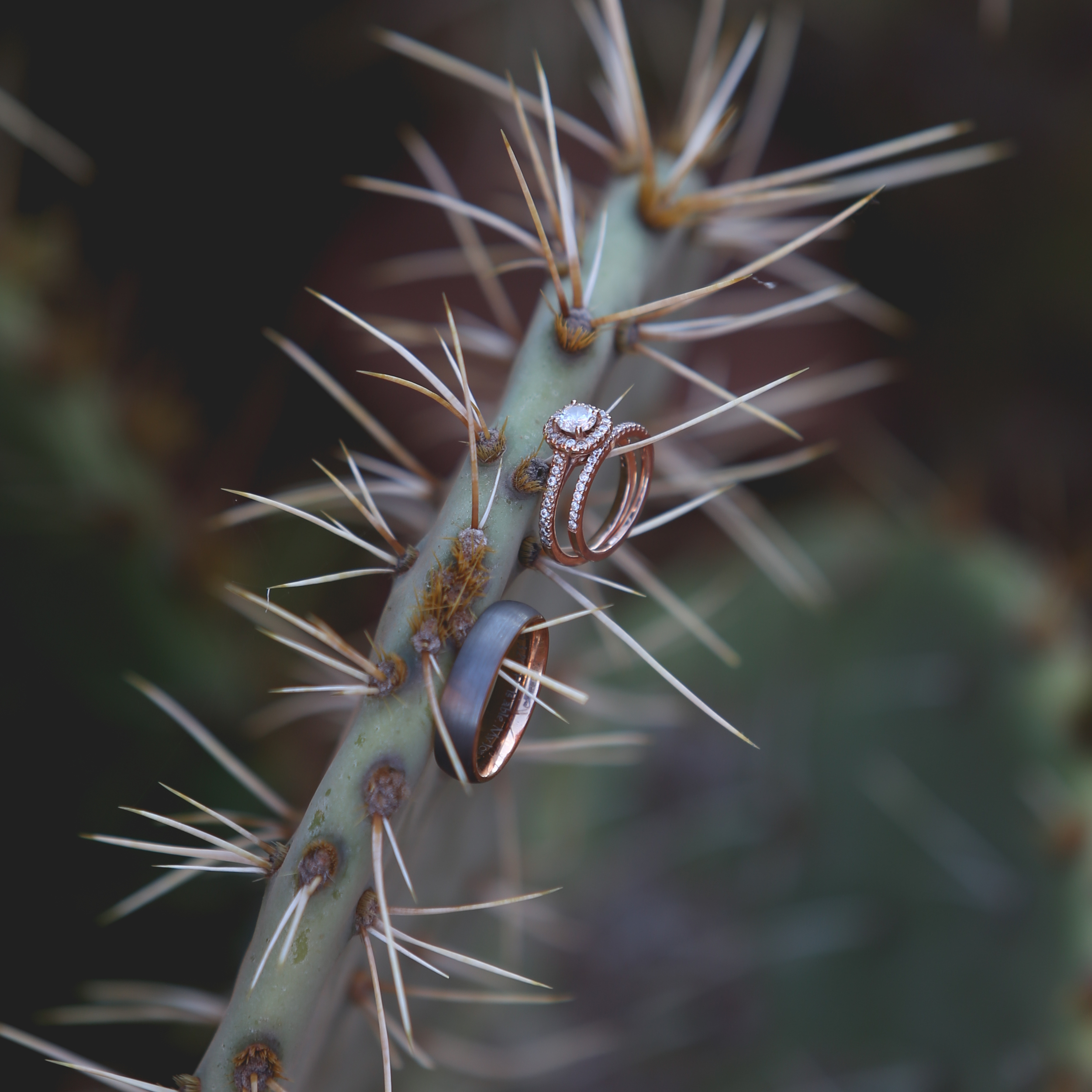 Honeymoon_Arizona_JonCourvillePhotography-8.jpg