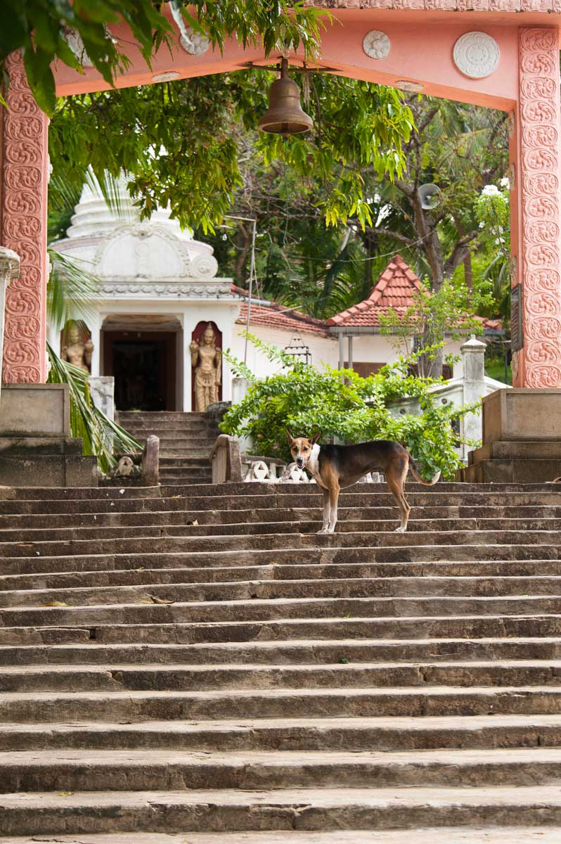 Sri Lanka-14.jpg