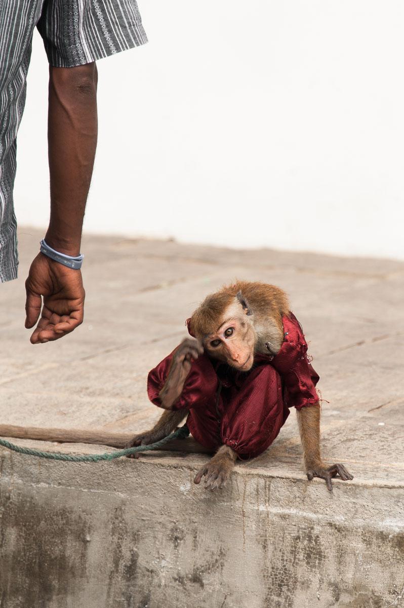 Sri Lanka-38.jpg
