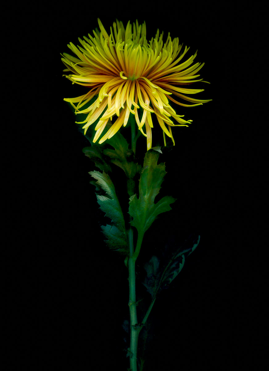 Flower Scans-4.jpg