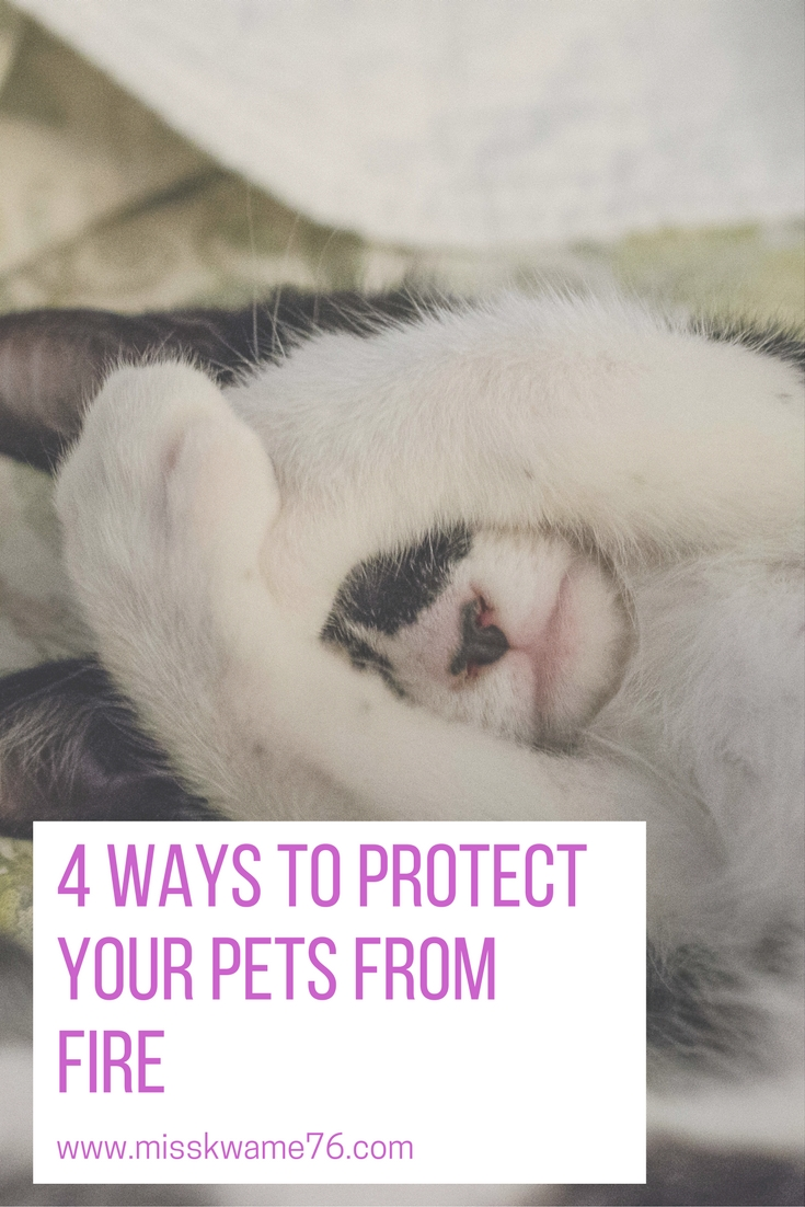 4 ways to protect your pets from fire.jpg