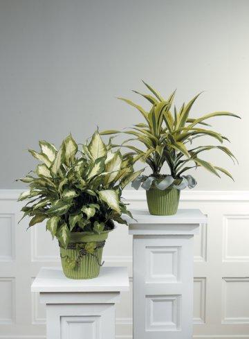 church-wedding-decorations-plants-03.jpg