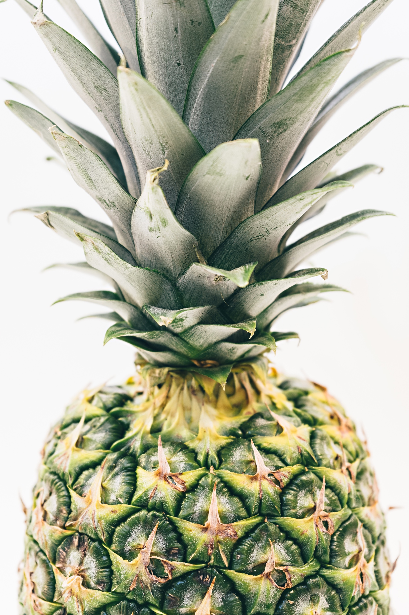 pineapple-supply-co-258368-unsplash.jpeg