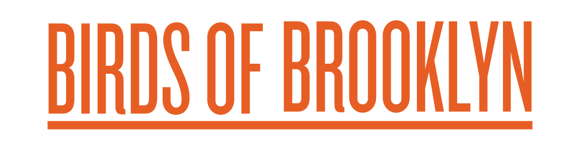 birds-of-brooklyn-web.png